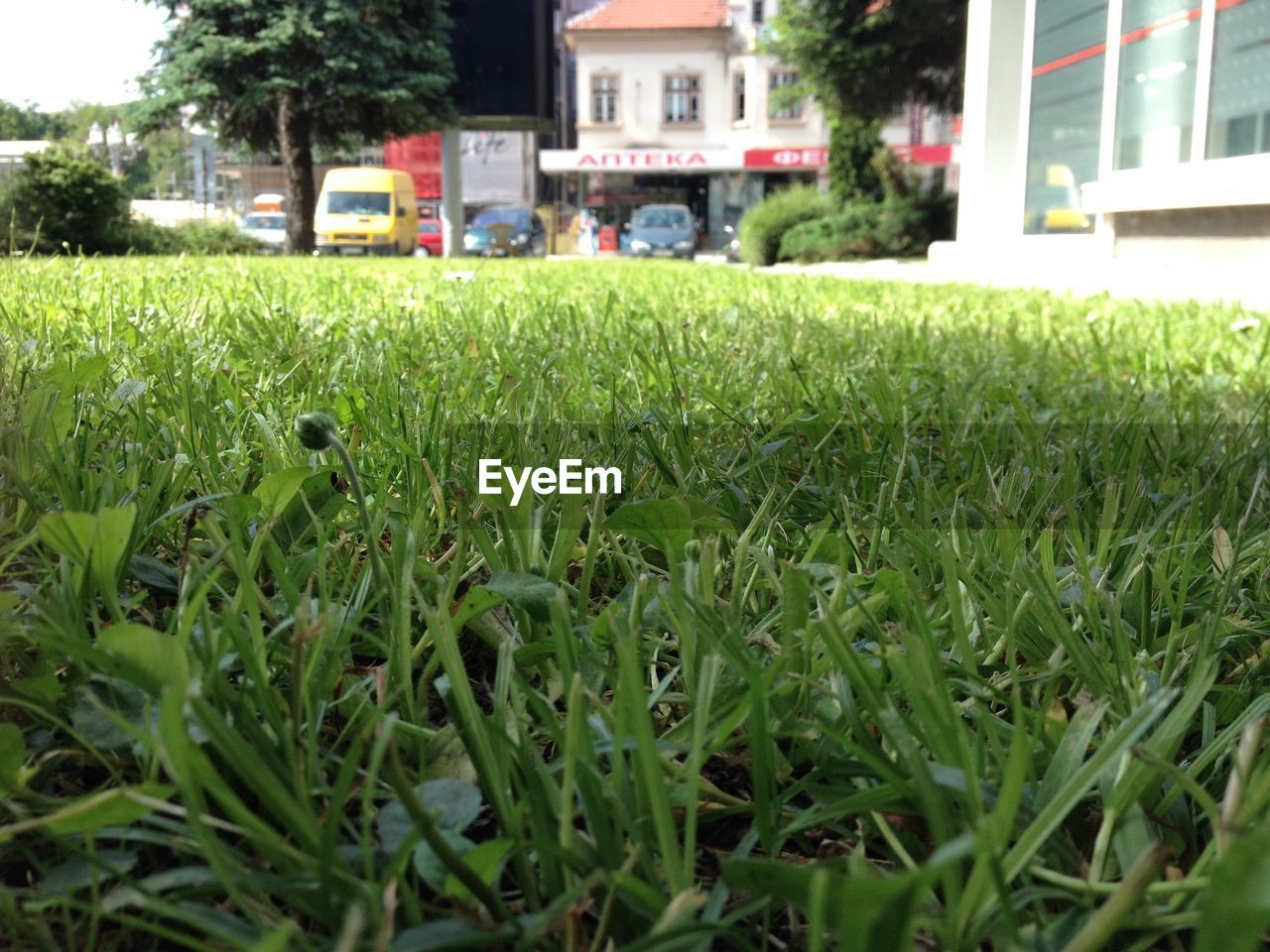 grass, green color, architecture, growth, outdoors, building exterior, day, no people, nature, tree, close-up, city