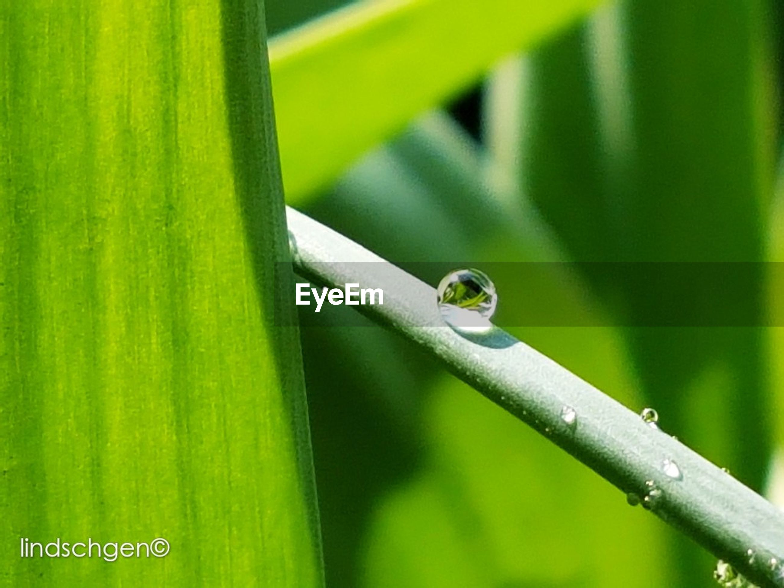 close-up, green color, plant, nature, focus on foreground, animal themes, one animal, animal wildlife, outdoors, animals in the wild, growth, fragility, day, no people, leaf, beauty in nature, insect, blade of grass