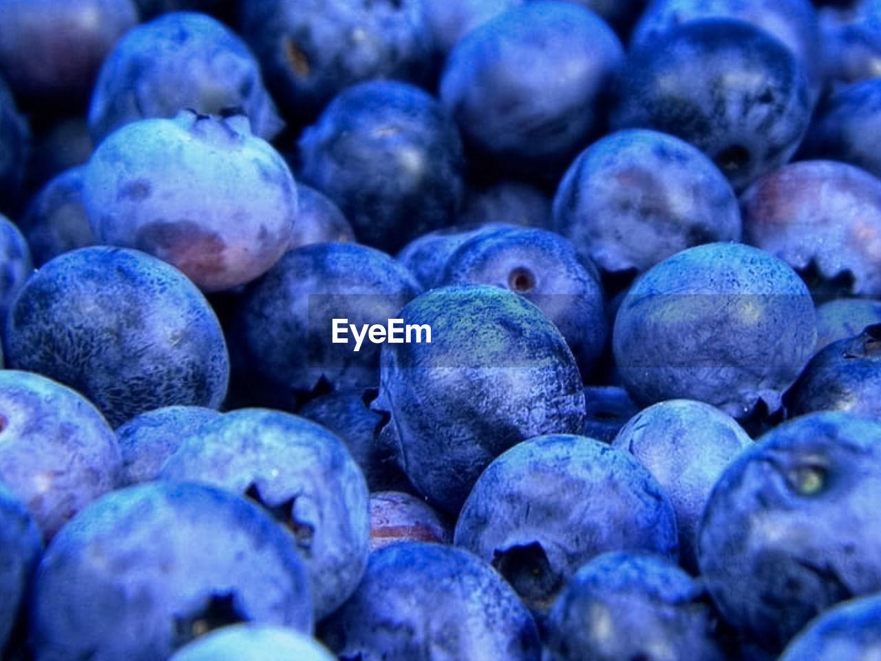 FULL FRAME SHOT OF FRESH BLUE AND BLUEBERRIES