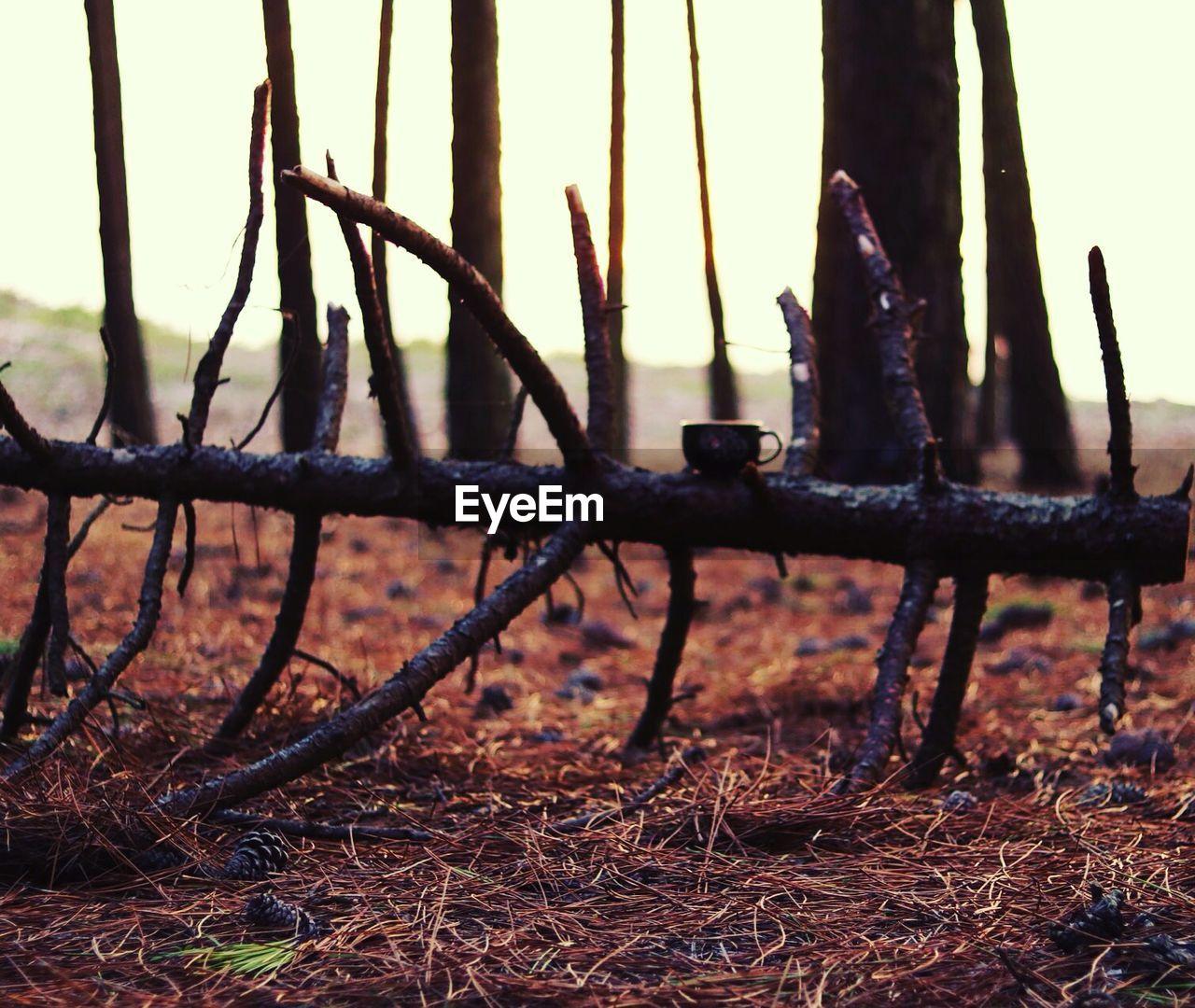 Fallen tree on straw field