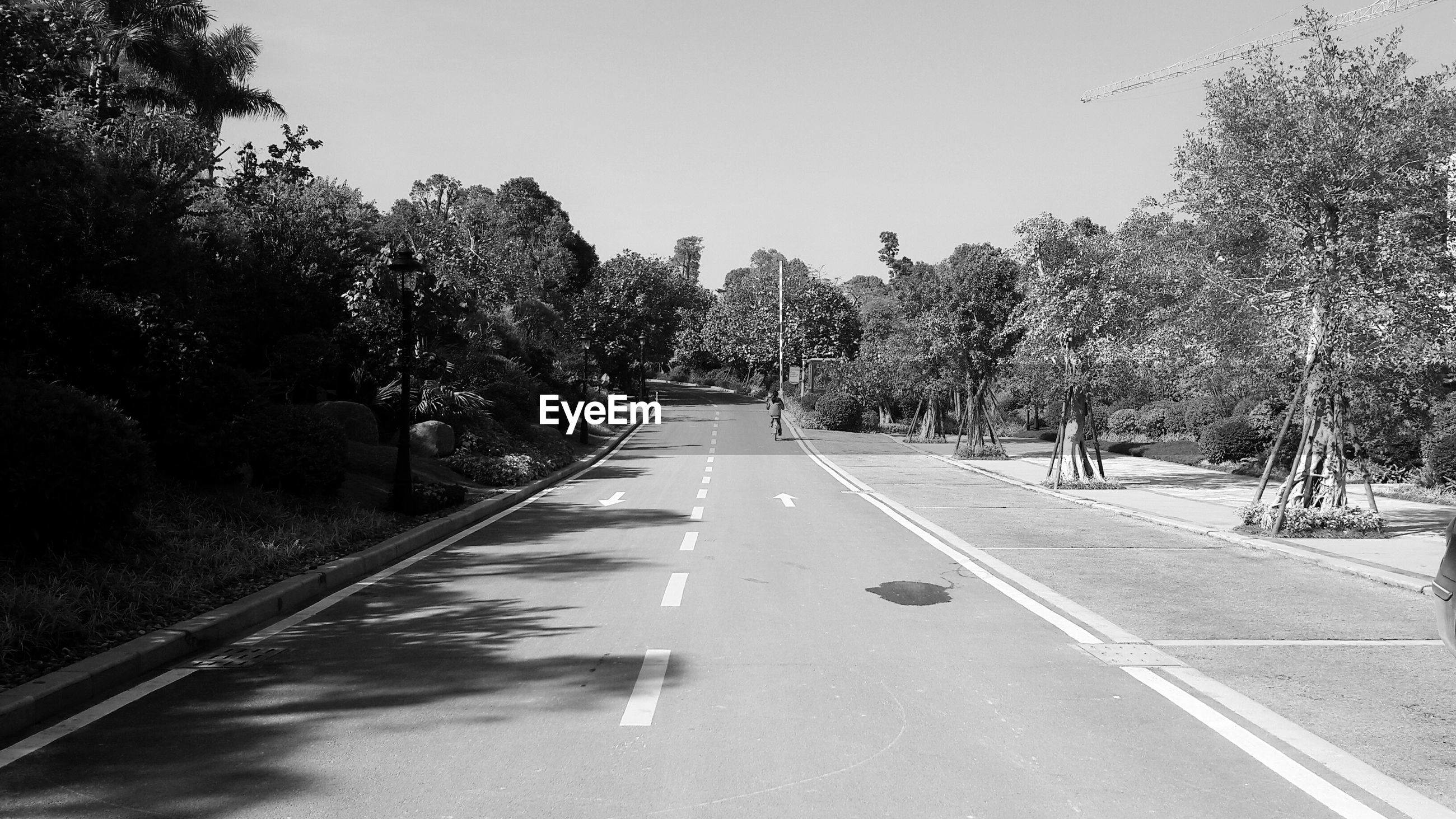 the way forward, transportation, tree, road, diminishing perspective, vanishing point, clear sky, road marking, tranquility, empty, empty road, country road, tranquil scene, asphalt, nature, long, sky, day, street, outdoors