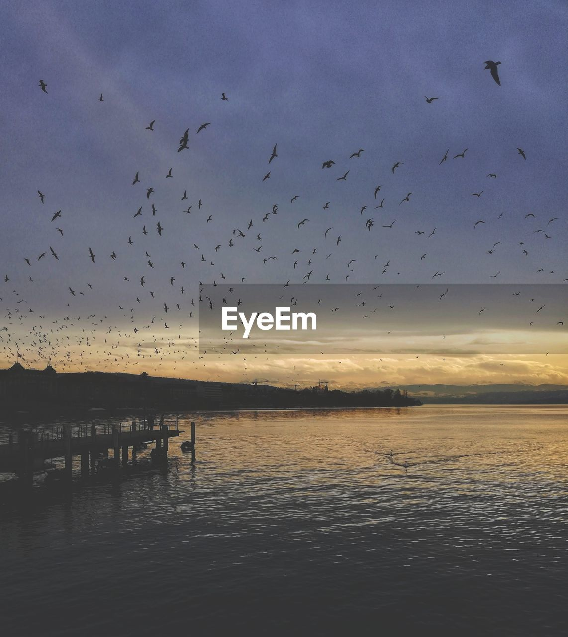 sky, bird, animal, animal themes, water, vertebrate, animals in the wild, large group of animals, group of animals, animal wildlife, beauty in nature, flying, sunset, waterfront, cloud - sky, scenics - nature, flock of birds, nature, tranquility, no people, outdoors, wooden post