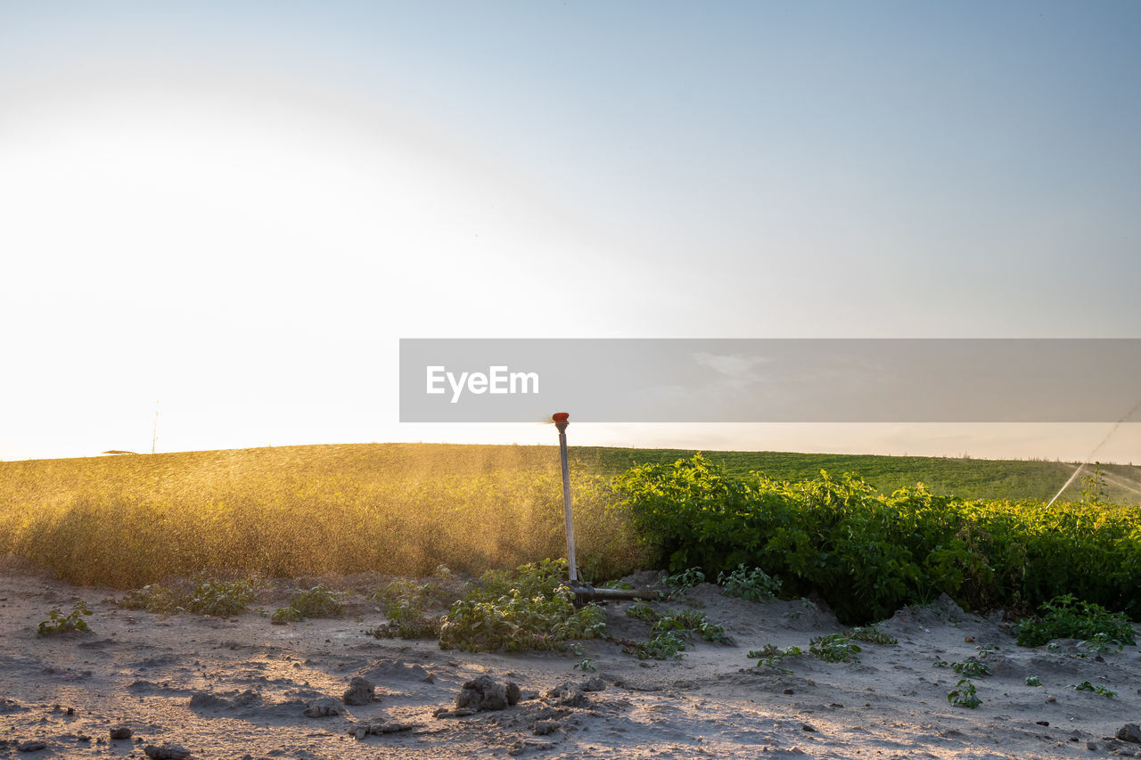 Automatic irrigation system for agriculture in the field, water spray around sunset