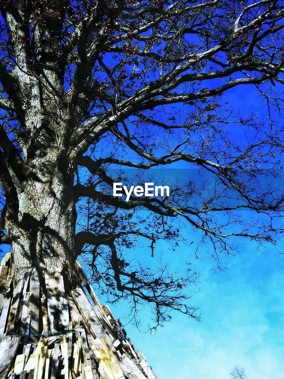 tree, tree trunk, low angle view, branch, growth, nature, blue, day, beauty in nature, sky, no people, outdoors, flower, close-up