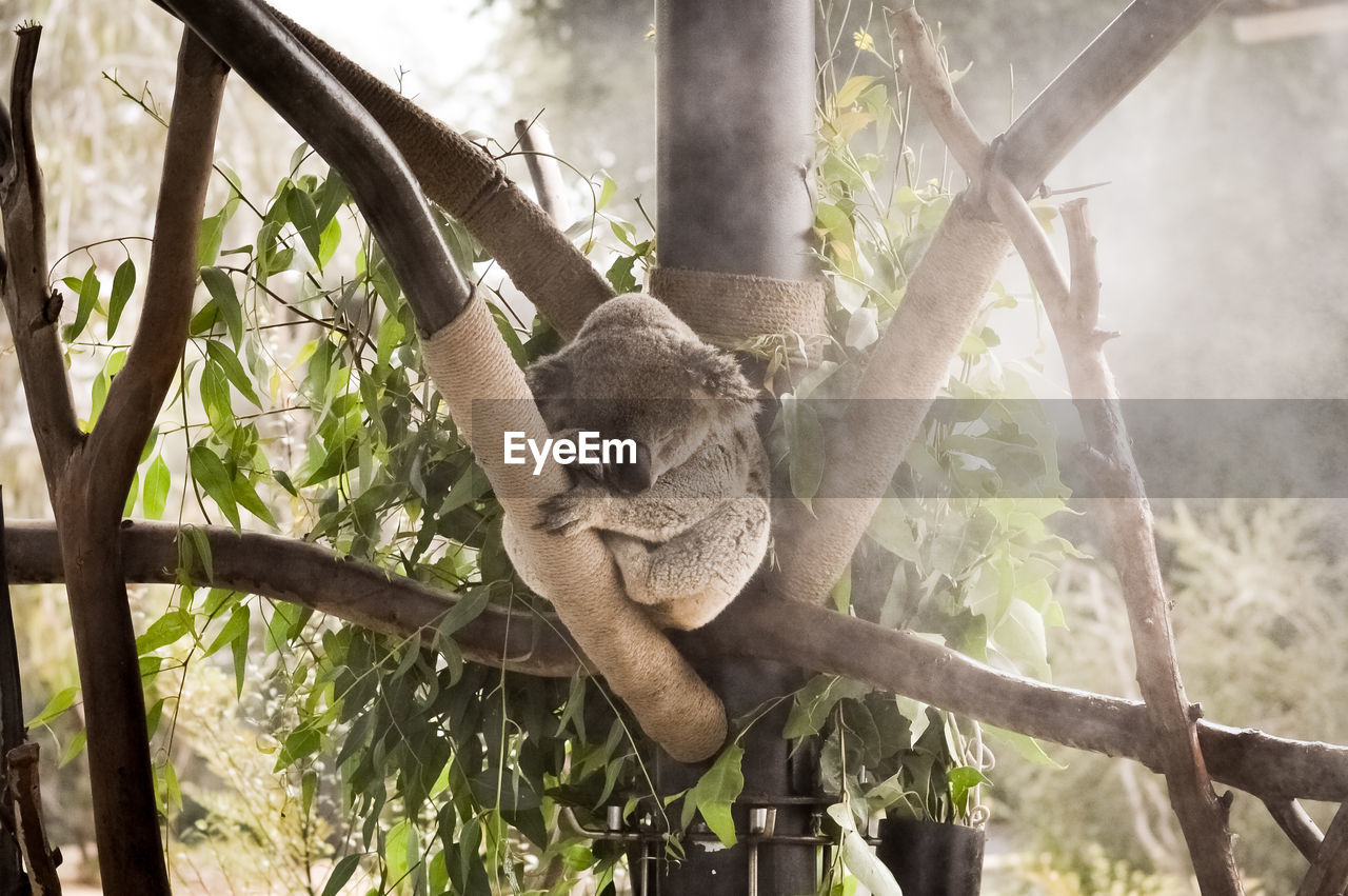 VIEW OF TREE SLEEPING ON PLANTS