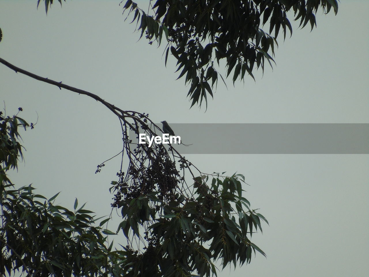 tree, low angle view, branch, nature, growth, beauty in nature, no people, outdoors, leaf, clear sky, day, plant, sky, flower, freshness