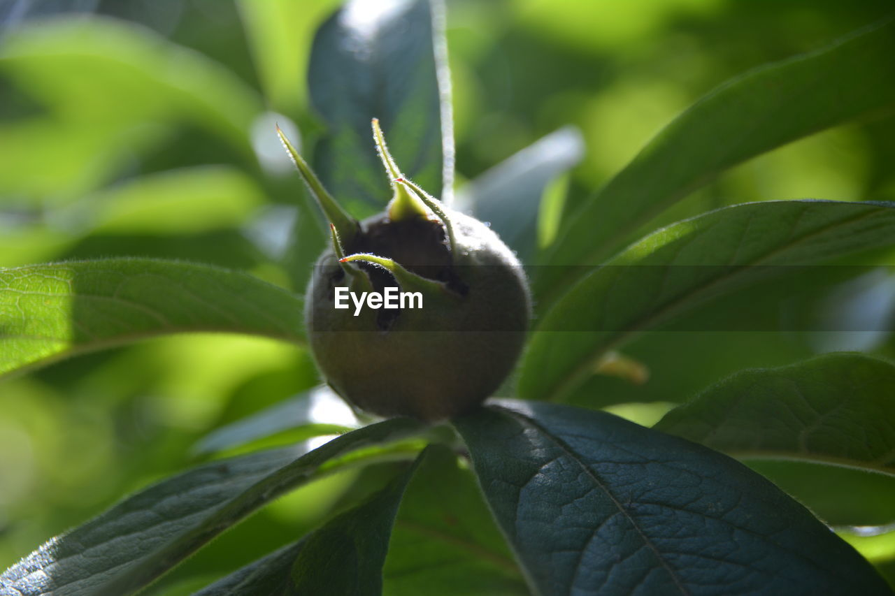 growth, plant part, plant, leaf, green color, close-up, fruit, nature, food, no people, food and drink, healthy eating, day, freshness, focus on foreground, beauty in nature, tree, outdoors, selective focus, wellbeing