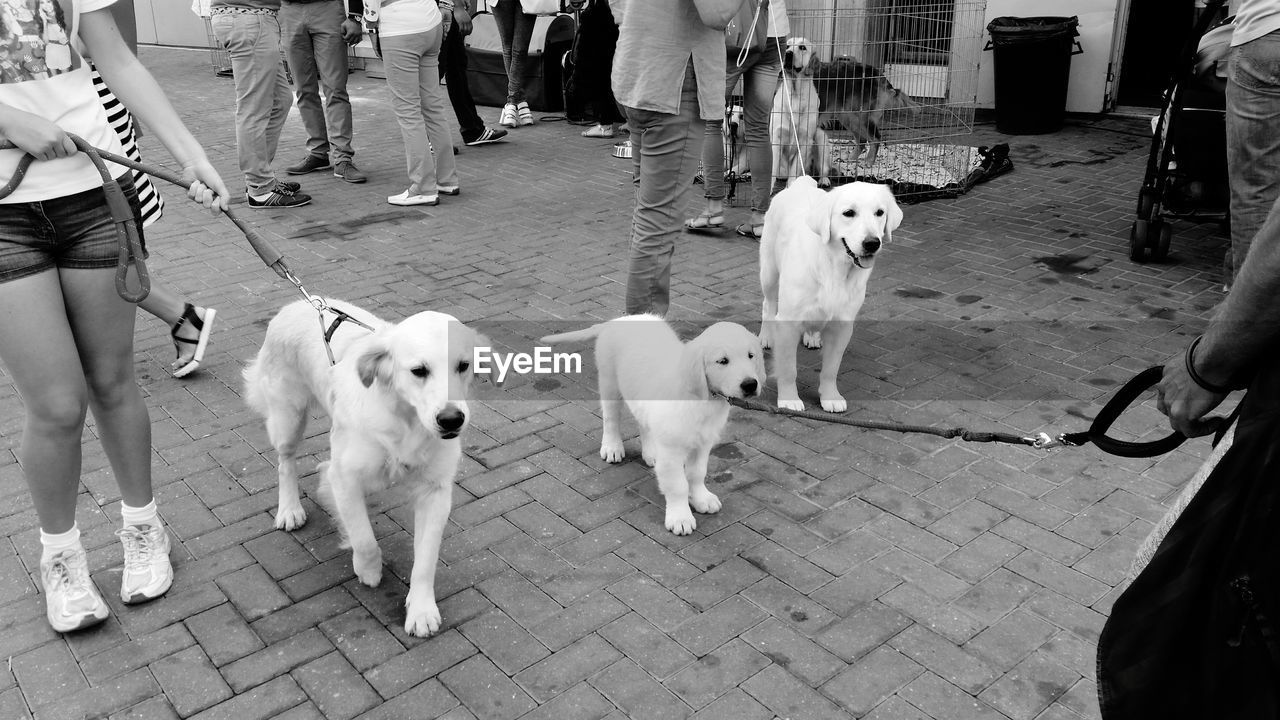 dog, canine, pets, domestic animals, mammal, domestic, one animal, vertebrate, real people, incidental people, city, footpath, low section, group of people, leash, street, people, outdoors, pet owner