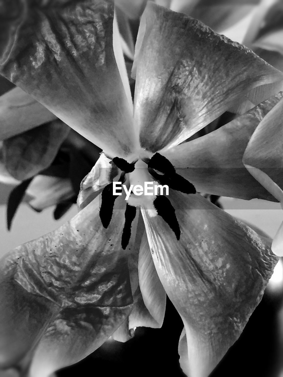 flower, petal, flower head, fragility, beauty in nature, growth, nature, close-up, freshness, no people, stamen, blooming, plant, day, springtime, outdoors, day lily