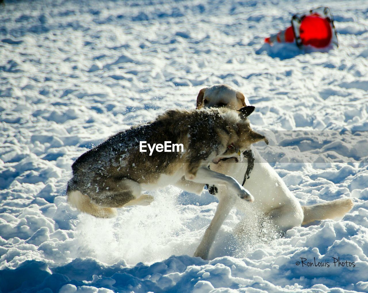 dog, snow, animal themes, winter, nature, day, outdoors, cold temperature, mammal, water, no people, domestic animals, bird