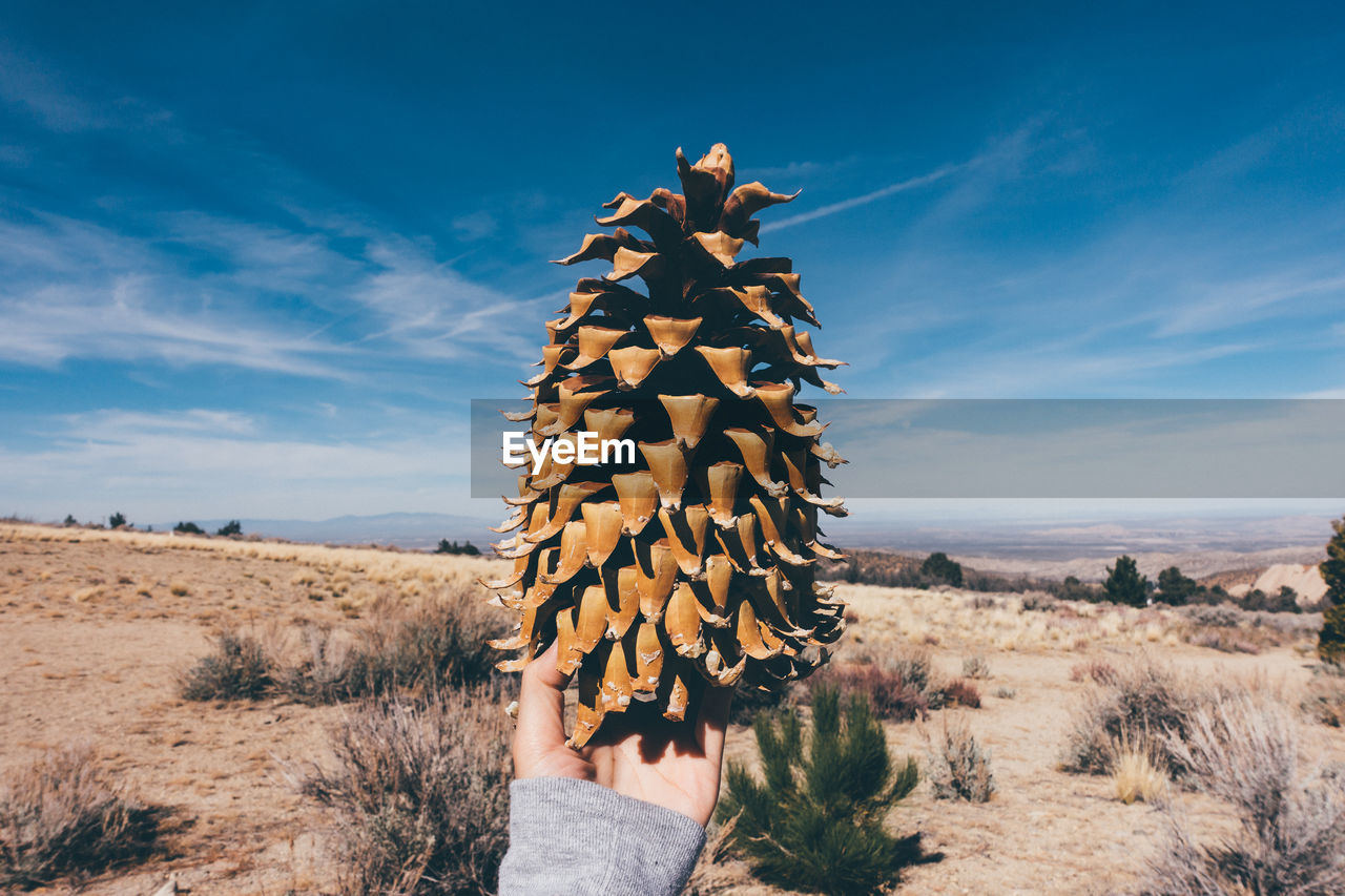 Cropped Image Of Person Holding Pine Cone In Desert