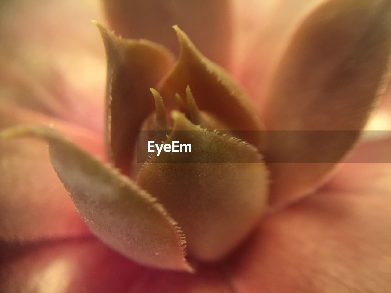 growth, plant, close-up, nature, selective focus, beauty in nature, fragility, freshness, no people, petal, flower, flower head, outdoors, day