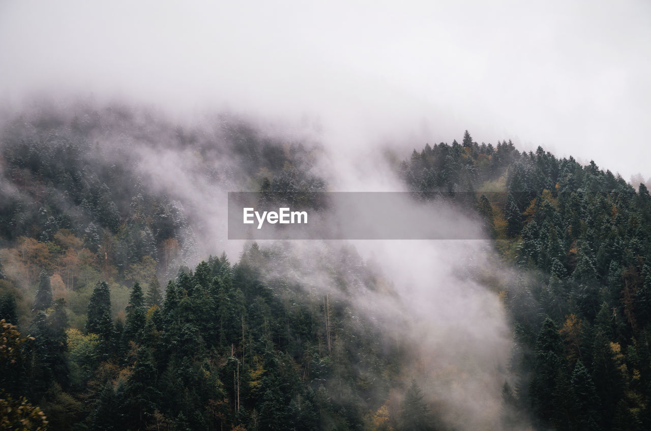 tree, nature, no people, beauty in nature, forest, tranquil scene, scenics, day, tranquility, outdoors, fog, growth, landscape, sky