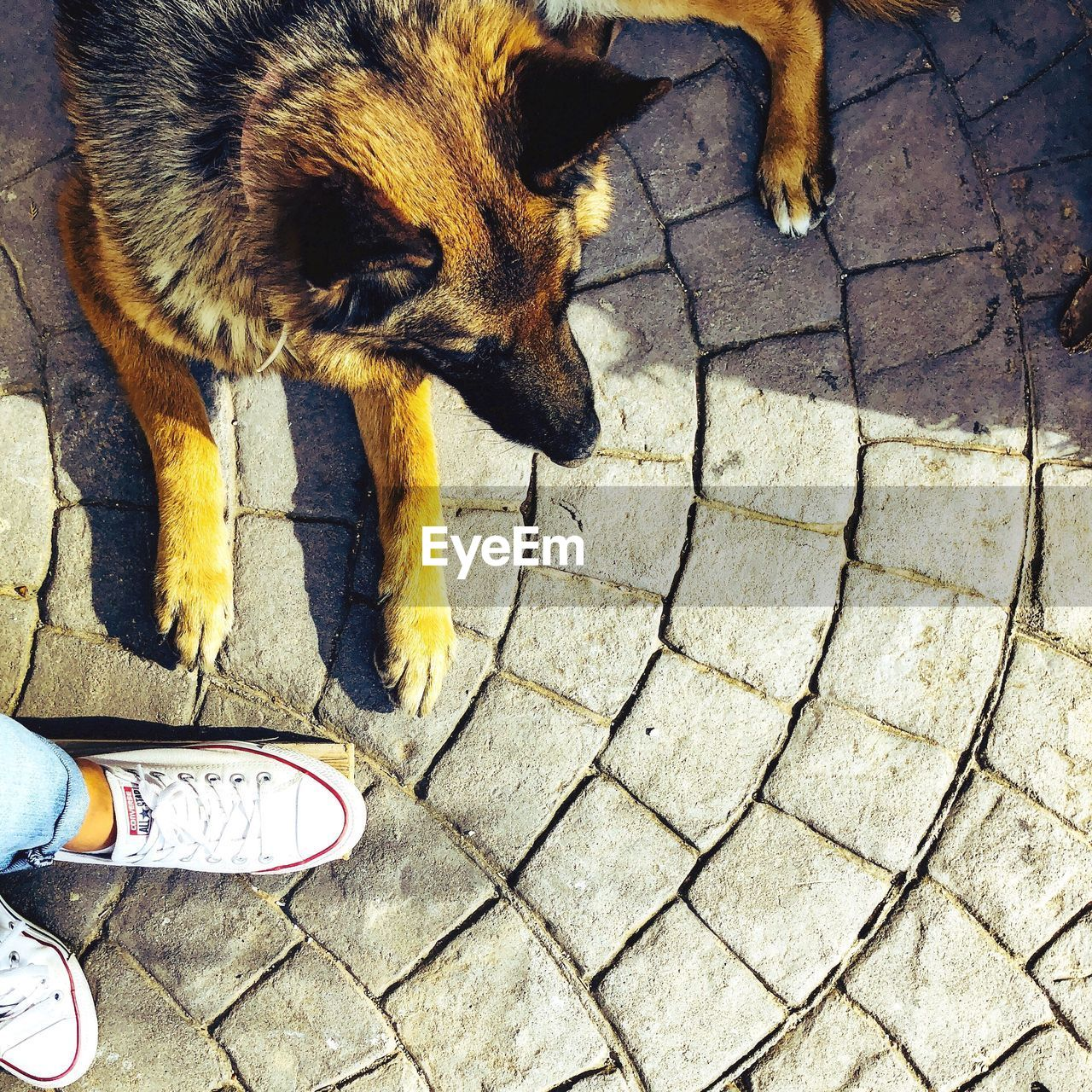 low section, mammal, human leg, body part, pets, domestic, human body part, domestic animals, one animal, high angle view, vertebrate, standing, shoe, people, real people, footpath, unrecognizable person, flooring, human foot, paving stone, jeans, human limb