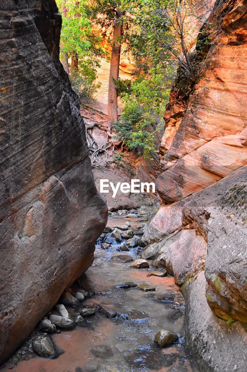 solid, rock, rock - object, tree, day, nature, plant, no people, tranquility, rock formation, forest, outdoors, beauty in nature, land, water, non-urban scene, travel, scenics - nature, travel destinations, flowing, flowing water, eroded