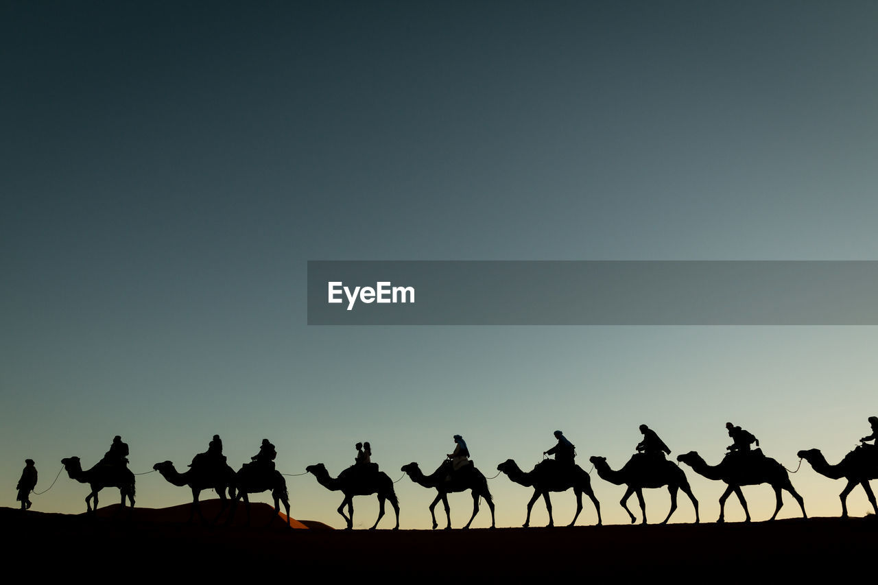 sky, copy space, group of animals, silhouette, animal themes, animal, clear sky, land, large group of animals, nature, vertebrate, beauty in nature, scenics - nature, camel, group of people, animal wildlife, mammal, tranquility, animals in the wild, outdoors