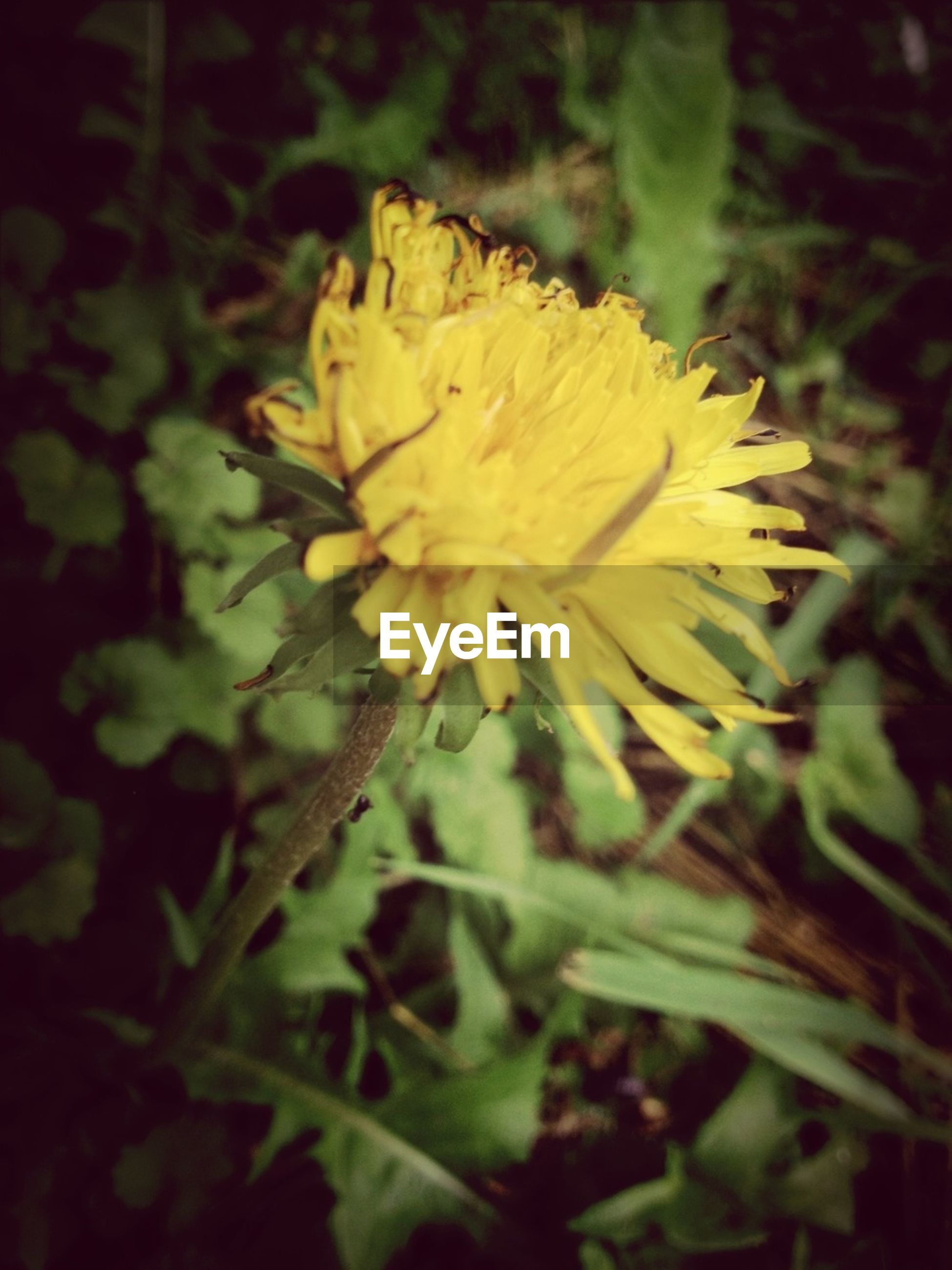 flower, petal, flower head, freshness, fragility, yellow, growth, beauty in nature, single flower, close-up, blooming, nature, plant, focus on foreground, in bloom, pollen, outdoors, selective focus, blossom, park - man made space