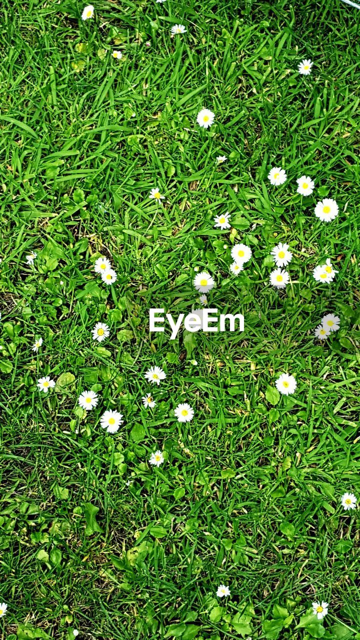 grass, flower, nature, green, growth, meadow, spring, summer, no people, outdoors, day
