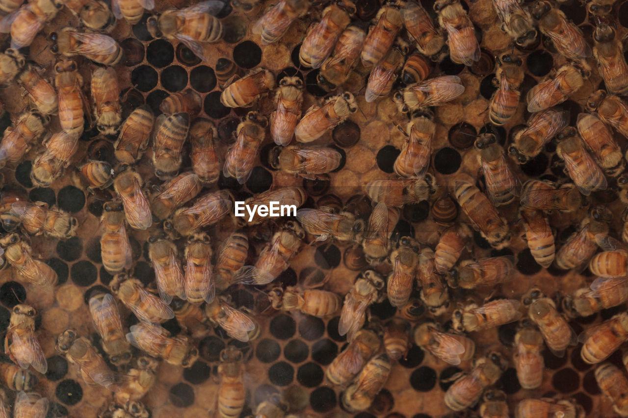 Full Frame Shot Of Honey Bees