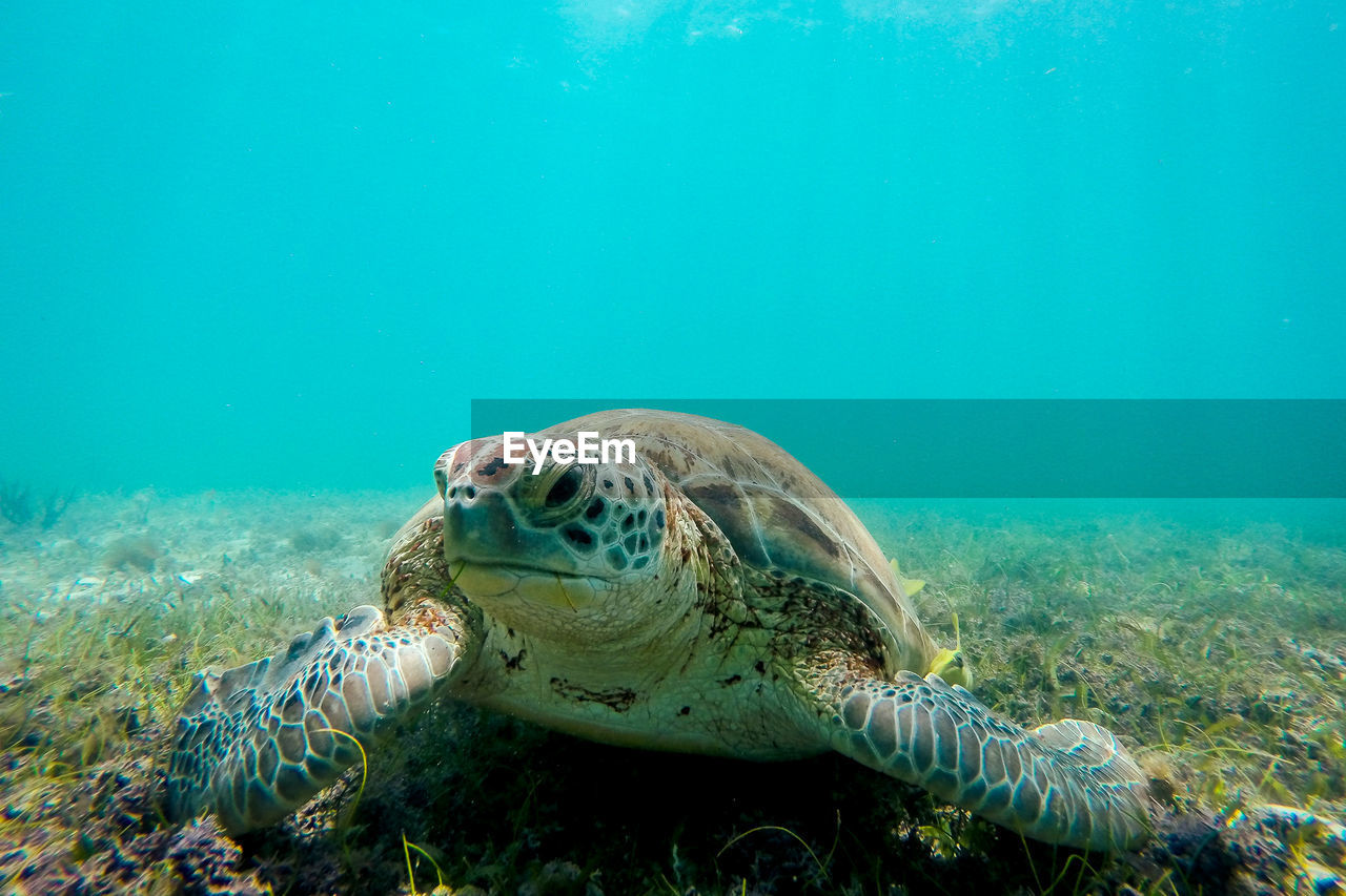 Close-Up Of Sea Turtle On Ocean Floor