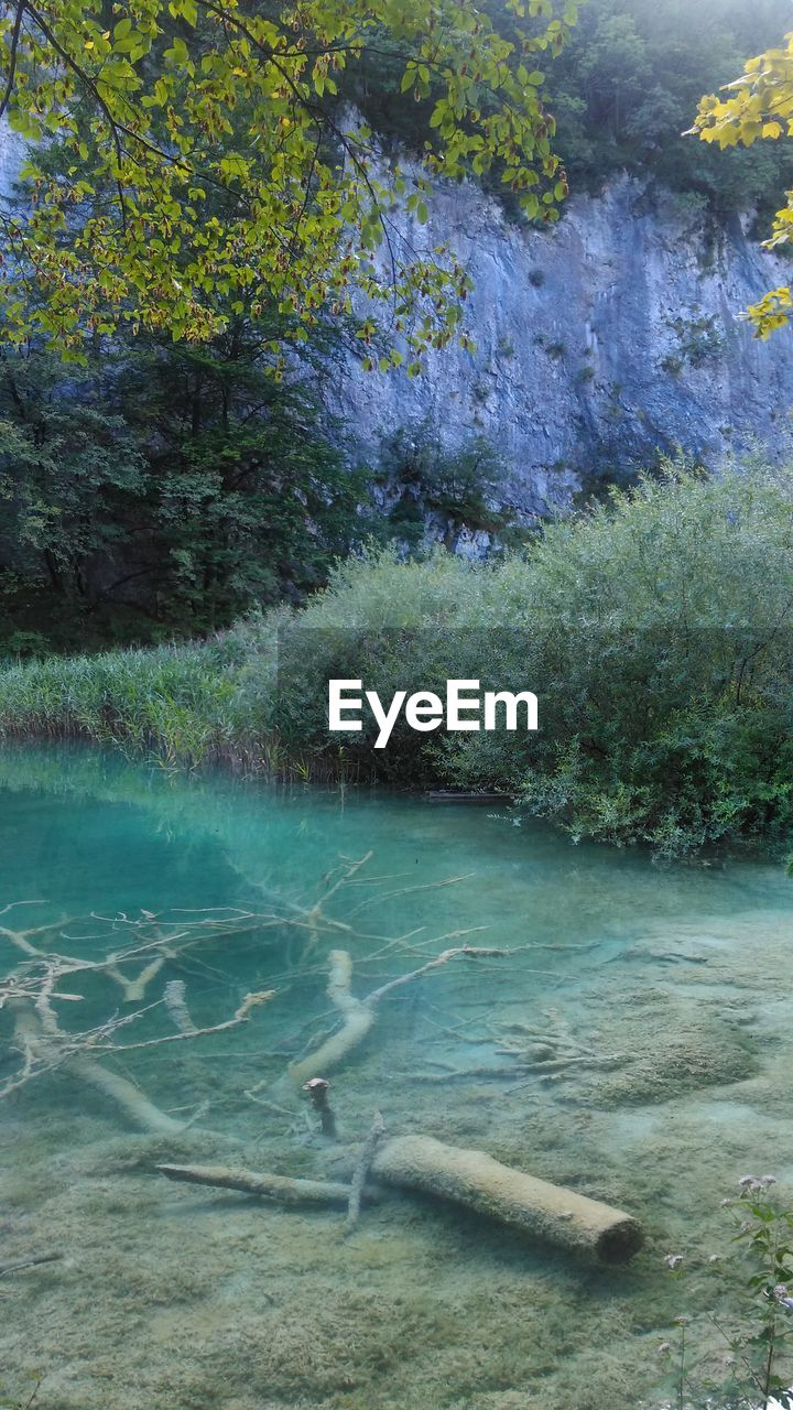 water, day, no people, nature, outdoors, tranquil scene, tree, tranquility, beauty in nature, scenics, lake, grass, close-up