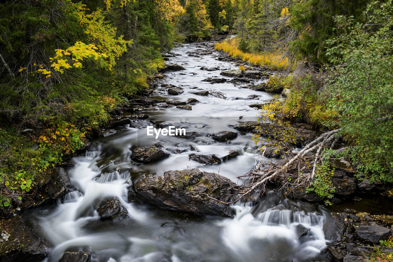 water, forest, scenics - nature, long exposure, flowing water, plant, land, beauty in nature, motion, tree, no people, nature, flowing, blurred motion, rock, solid, rock - object, day, stream - flowing water, outdoors, power in nature