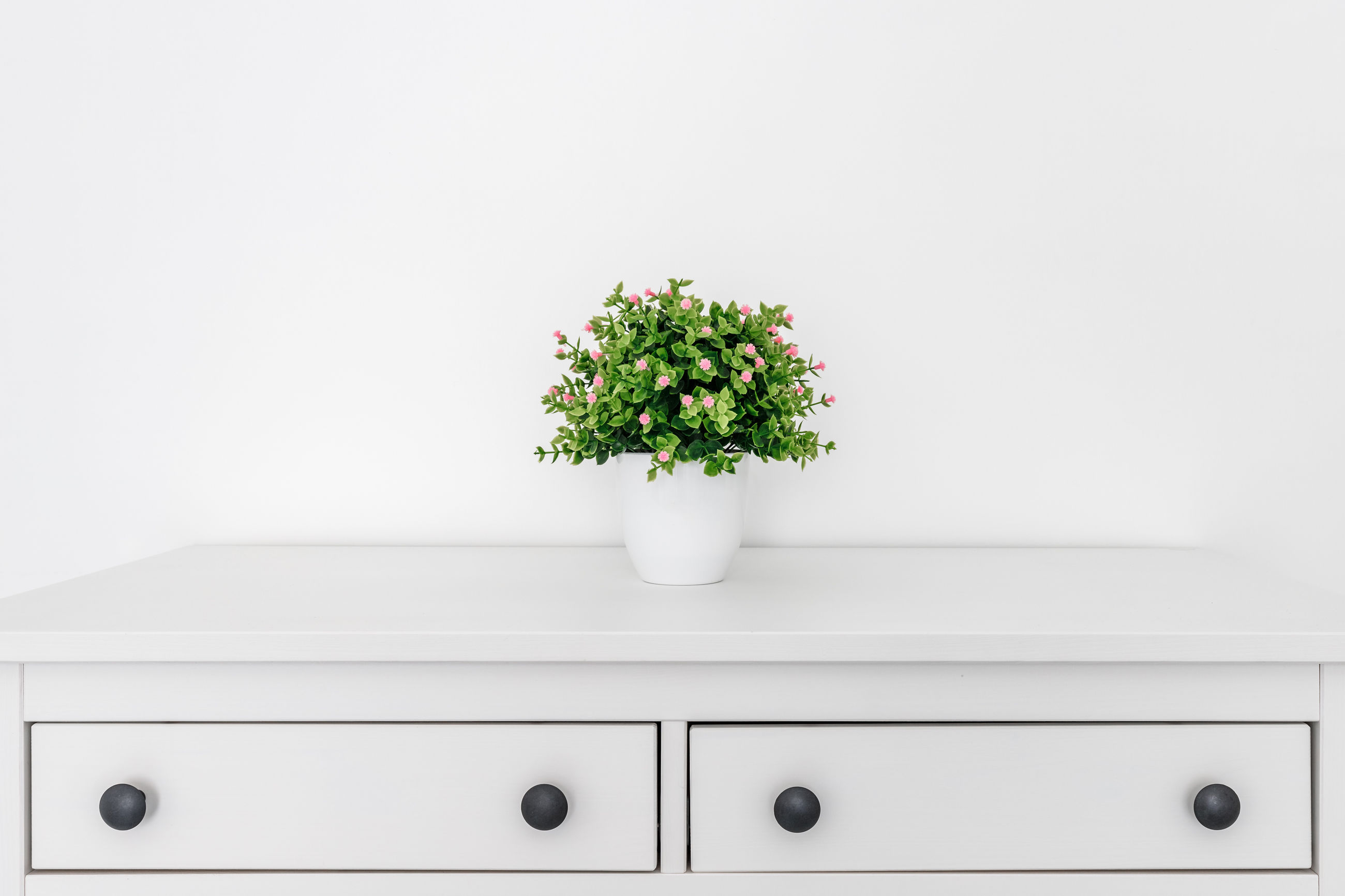 WHITE POTTED PLANT AGAINST WALL