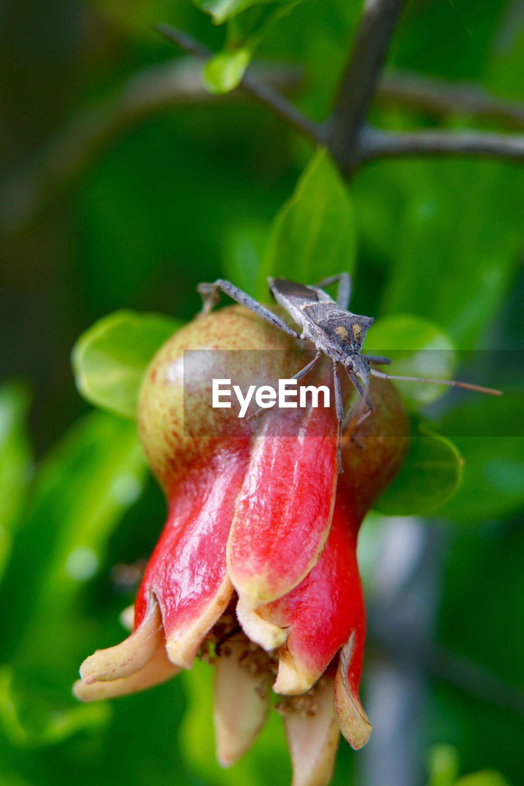 Close-up of bug on bud