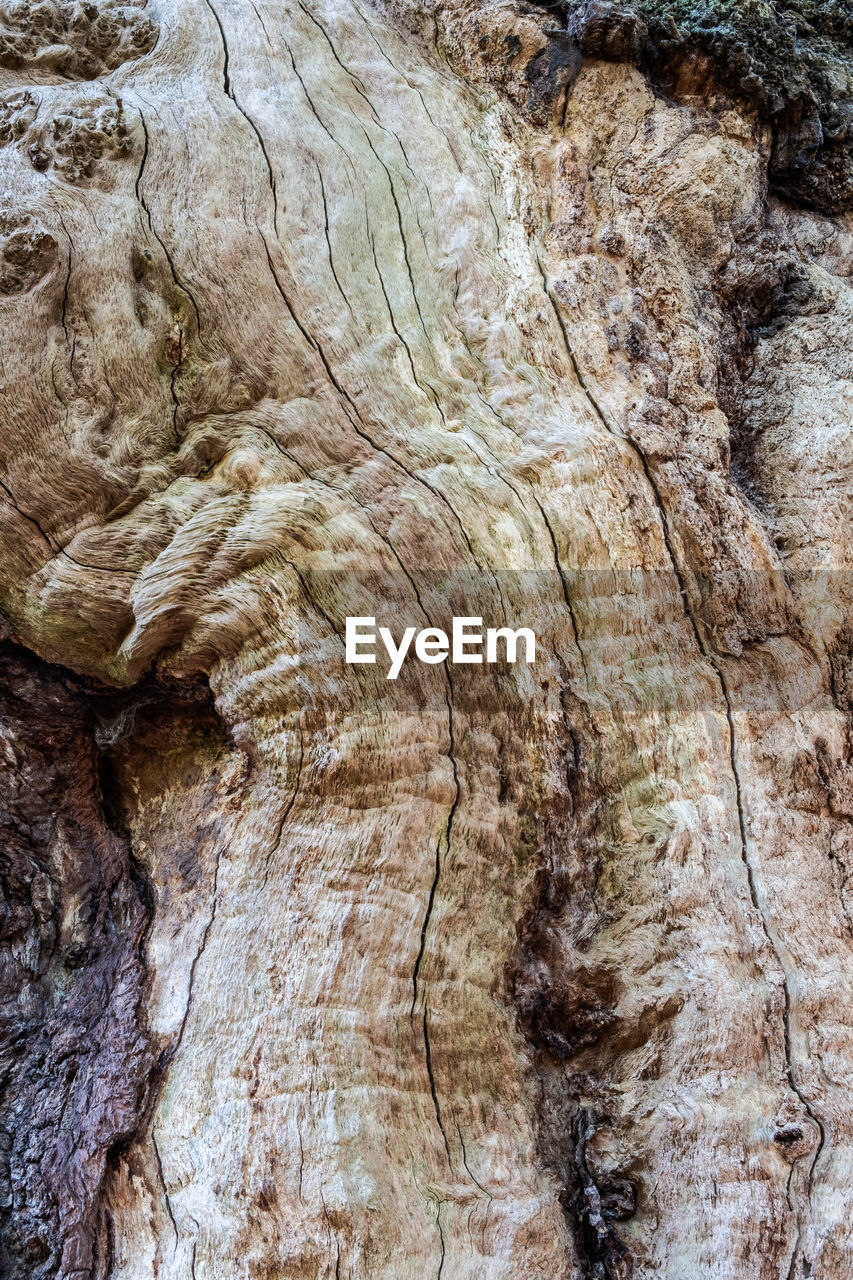 textured, full frame, pattern, backgrounds, rough, close-up, no people, natural pattern, tree, nature, rock, geology, rock - object, day, rock formation, solid, tree trunk, plant, outdoors, trunk, bark, eroded, textured effect, natural condition