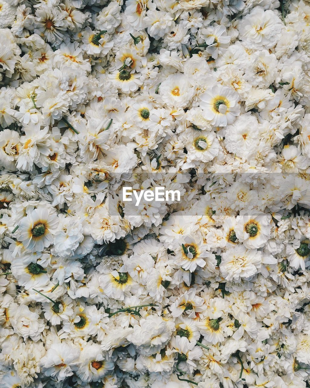 full frame, backgrounds, flower, flowering plant, freshness, no people, close-up, plant, white color, vulnerability, nature, fragility, abundance, beauty in nature, large group of objects, petal, flower head, day, directly above, high angle view