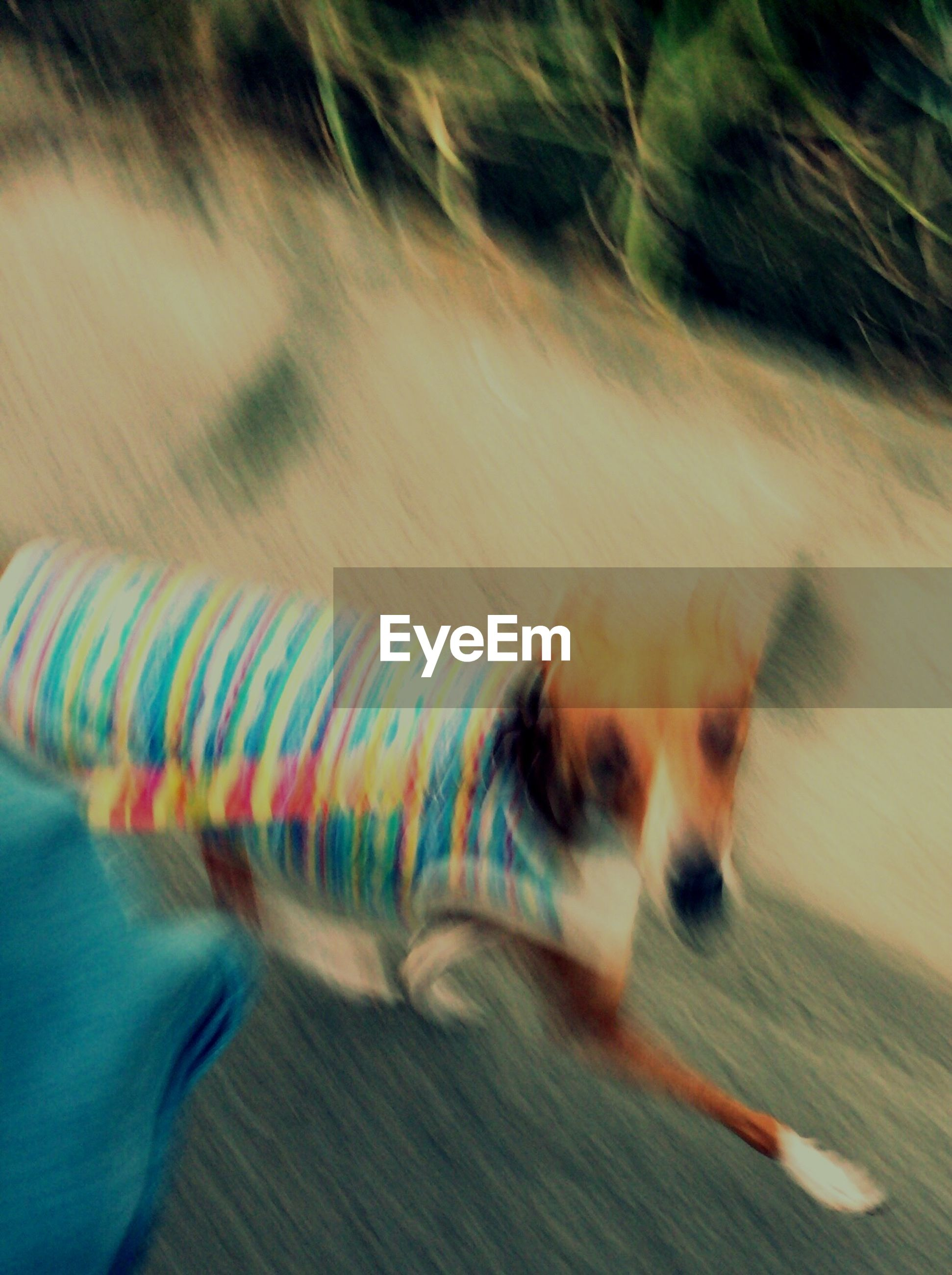 domestic animals, dog, mammal, one animal, pets, animal themes, indoors, blurred motion, motion, lifestyles, high angle view, leisure activity, person, rear view, speed, men, unrecognizable person