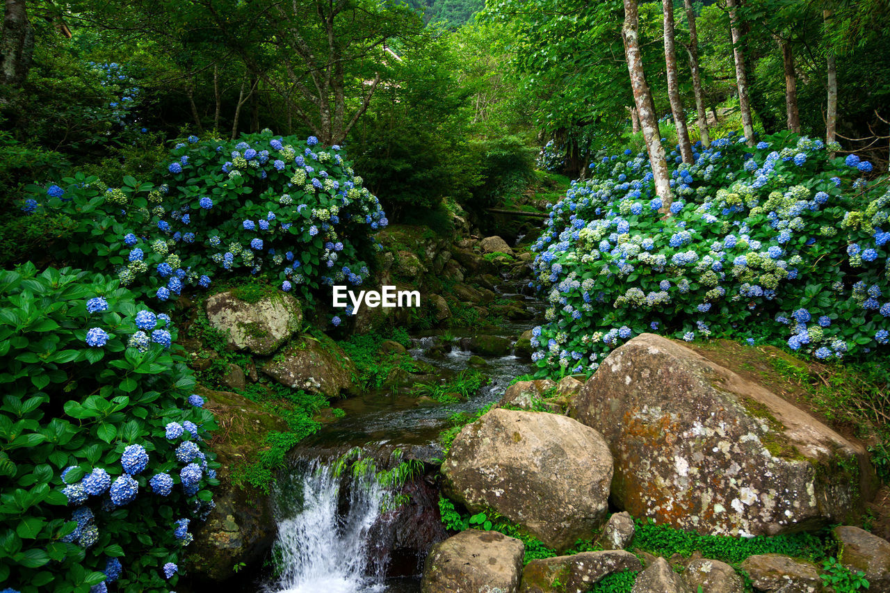 rock - object, nature, plant, green color, waterfall, tree, outdoors, scenics, water, no people, forest, beauty in nature, day, flower