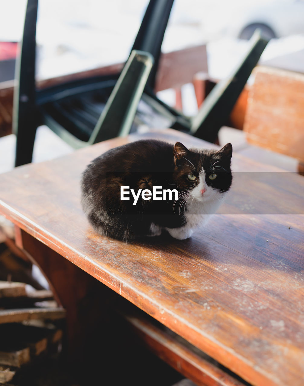 cat, domestic cat, feline, animal themes, animal, domestic, domestic animals, mammal, pets, one animal, vertebrate, relaxation, wood - material, no people, table, sitting, seat, indoors, portrait, selective focus, whisker, animal eye