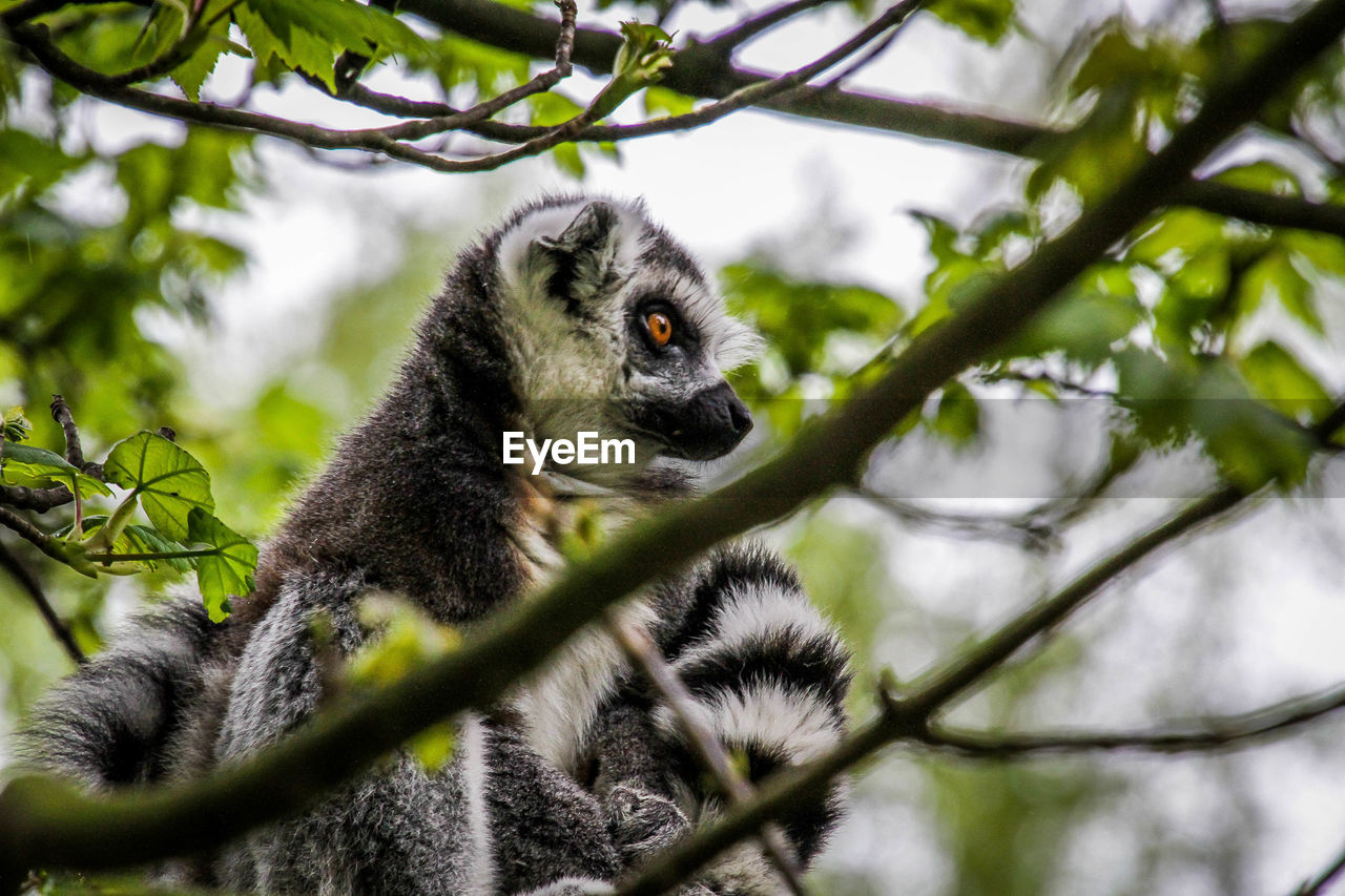 animal themes, animal, animal wildlife, tree, one animal, animals in the wild, plant, mammal, branch, vertebrate, low angle view, nature, no people, selective focus, day, outdoors, portrait, looking away, close-up, leaf