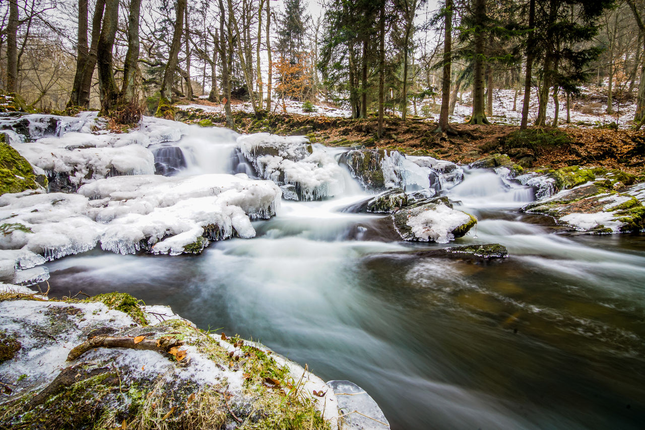 tree, forest, water, beauty in nature, long exposure, flowing water, blurred motion, plant, scenics - nature, waterfall, motion, land, rock, solid, rock - object, no people, nature, day, flowing, outdoors, stream - flowing water, woodland, power in nature
