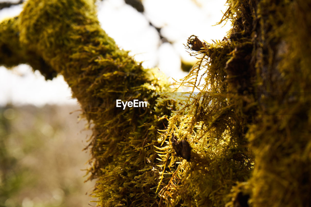 plant, tree, growth, close-up, selective focus, no people, tree trunk, focus on foreground, moss, trunk, nature, day, beauty in nature, tranquility, animals in the wild, outdoors, animal wildlife, lichen, one animal, animal