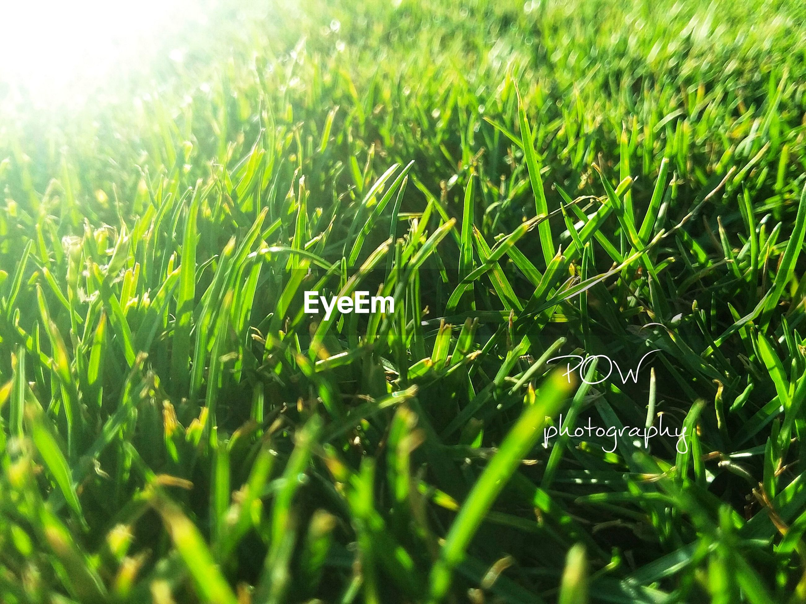 green color, grass, growth, field, nature, day, no people, backgrounds, plant, outdoors, beauty in nature, full frame, agriculture, close-up, freshness