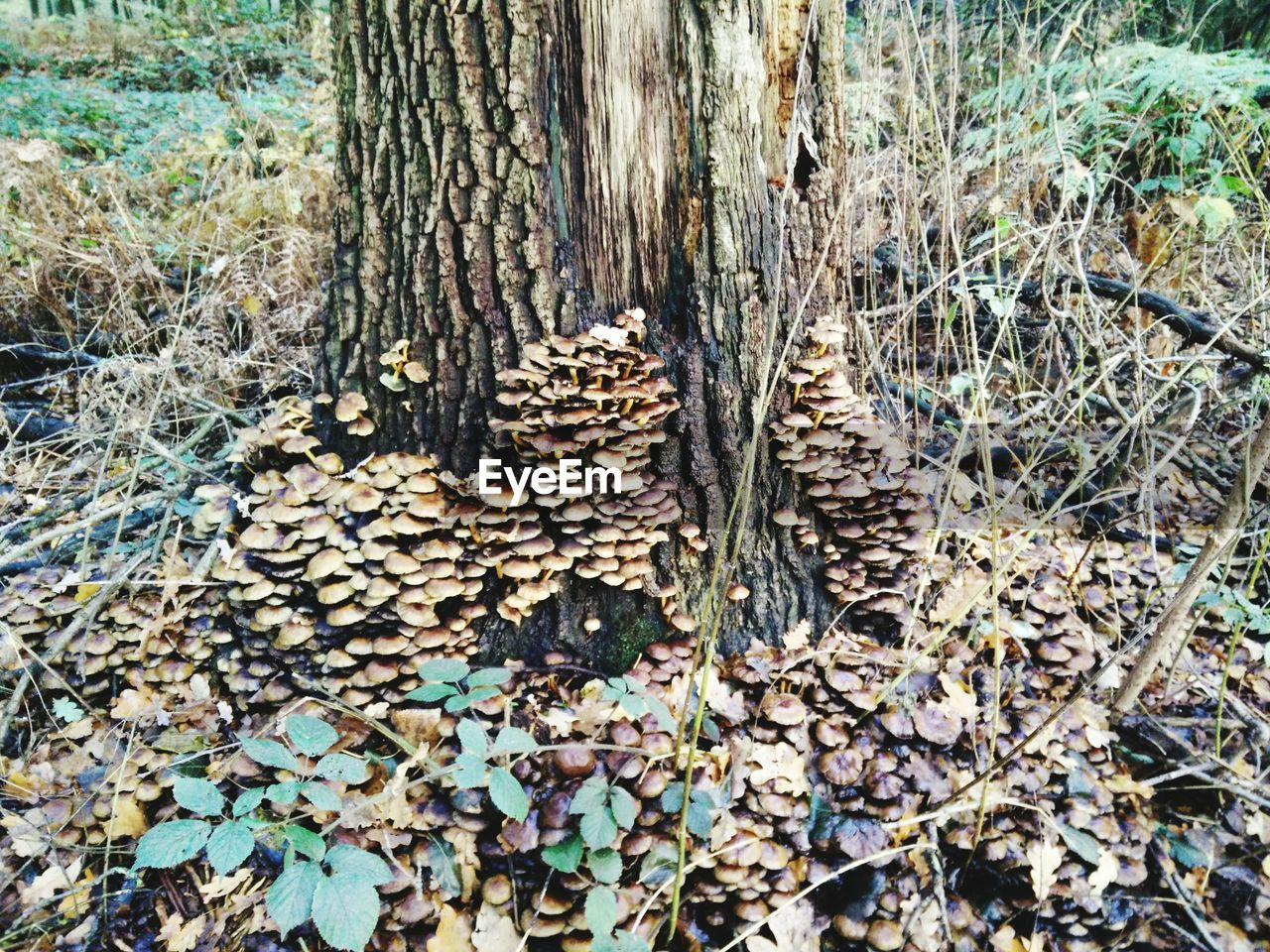 tree trunk, tree, abundance, day, nature, outdoors, forest, no people, close-up