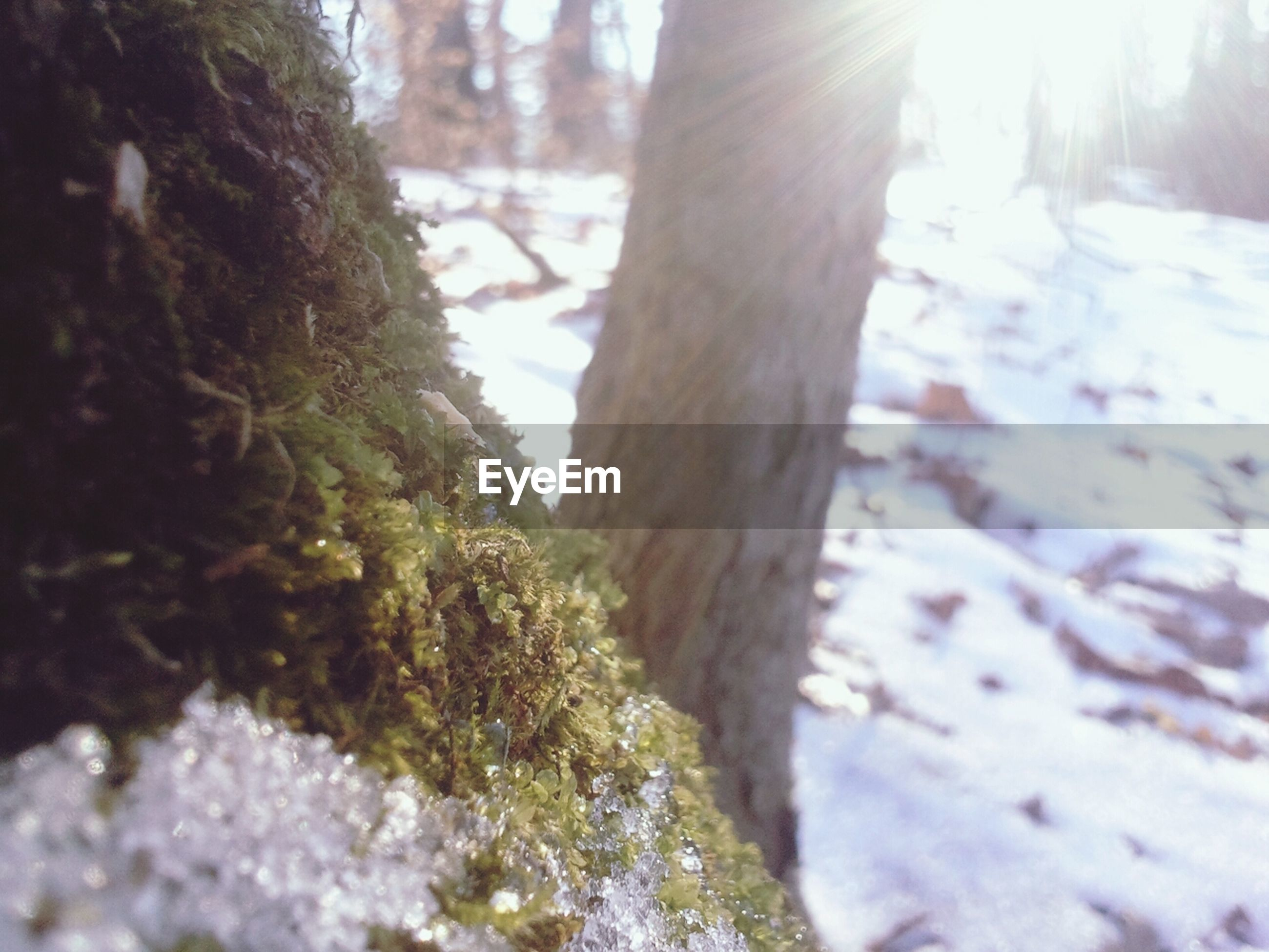 tree trunk, tree, sunlight, focus on foreground, nature, forest, close-up, lens flare, selective focus, winter, season, sunbeam, day, growth, tranquility, snow, outdoors, no people, beauty in nature, cold temperature