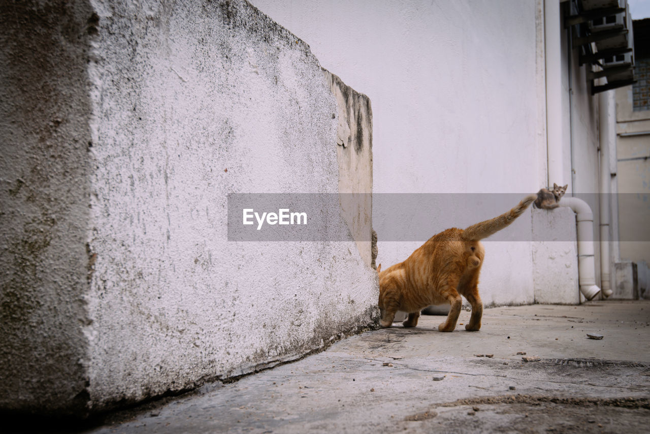 Low section of cat standing by wall on footpath