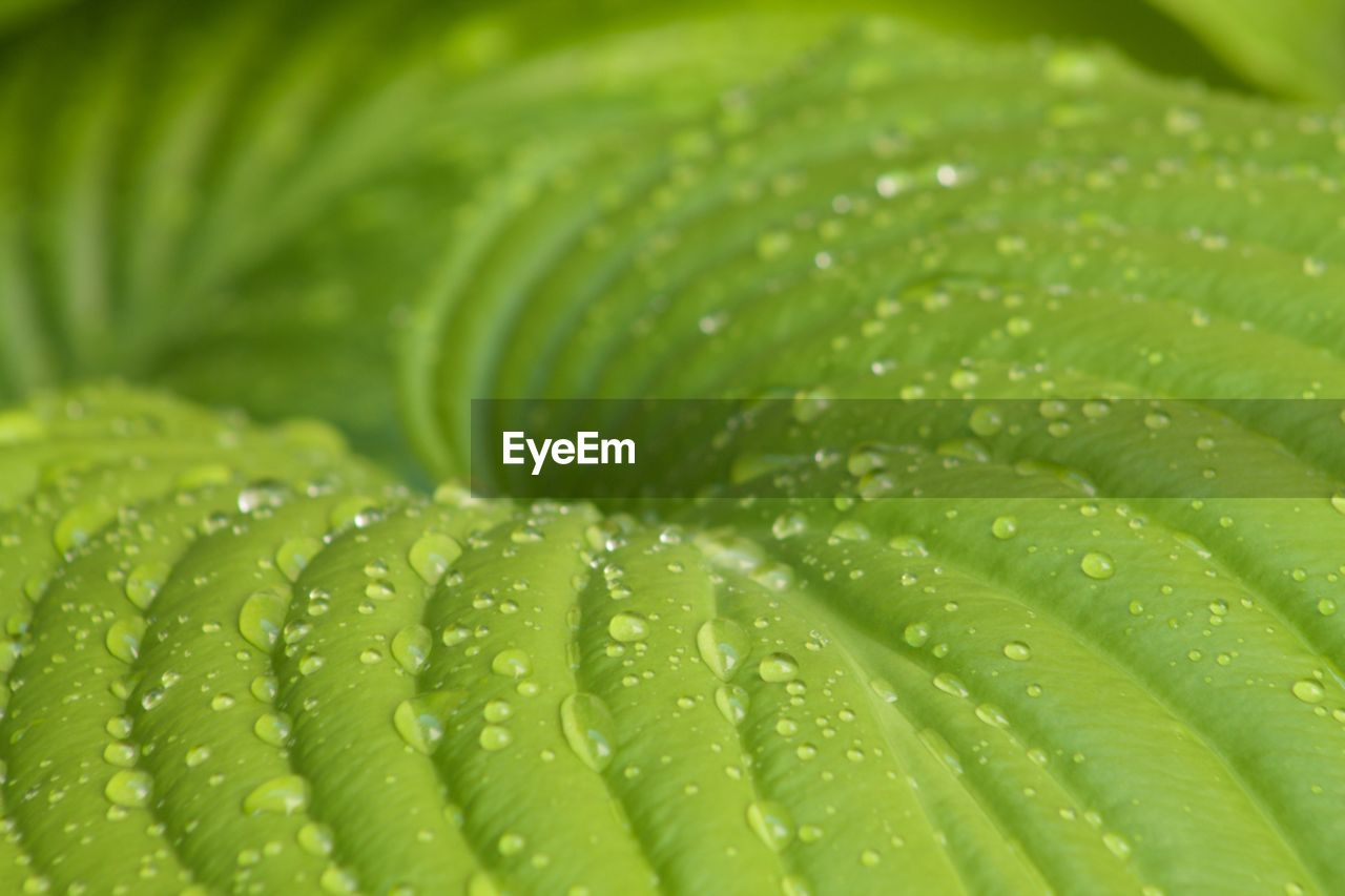 green color, drop, water, leaf, freshness, close-up, wet, backgrounds, selective focus, raindrop, nature, growth, no people, full frame, plant, beauty in nature, outdoors, day