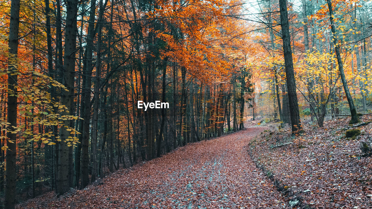 autumn, tree, forest, change, plant, land, beauty in nature, leaf, plant part, trunk, tree trunk, the way forward, nature, tranquility, orange color, direction, growth, day, tranquil scene, footpath, woodland, no people, outdoors, autumn collection, fall, leaves