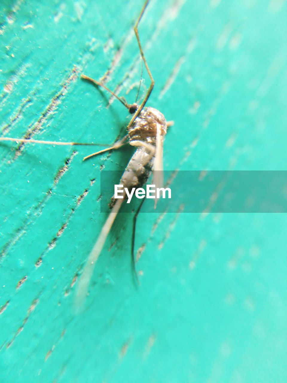 one animal, insect, animal themes, animals in the wild, green color, close-up, animal wildlife, no people, day, outdoors, nature