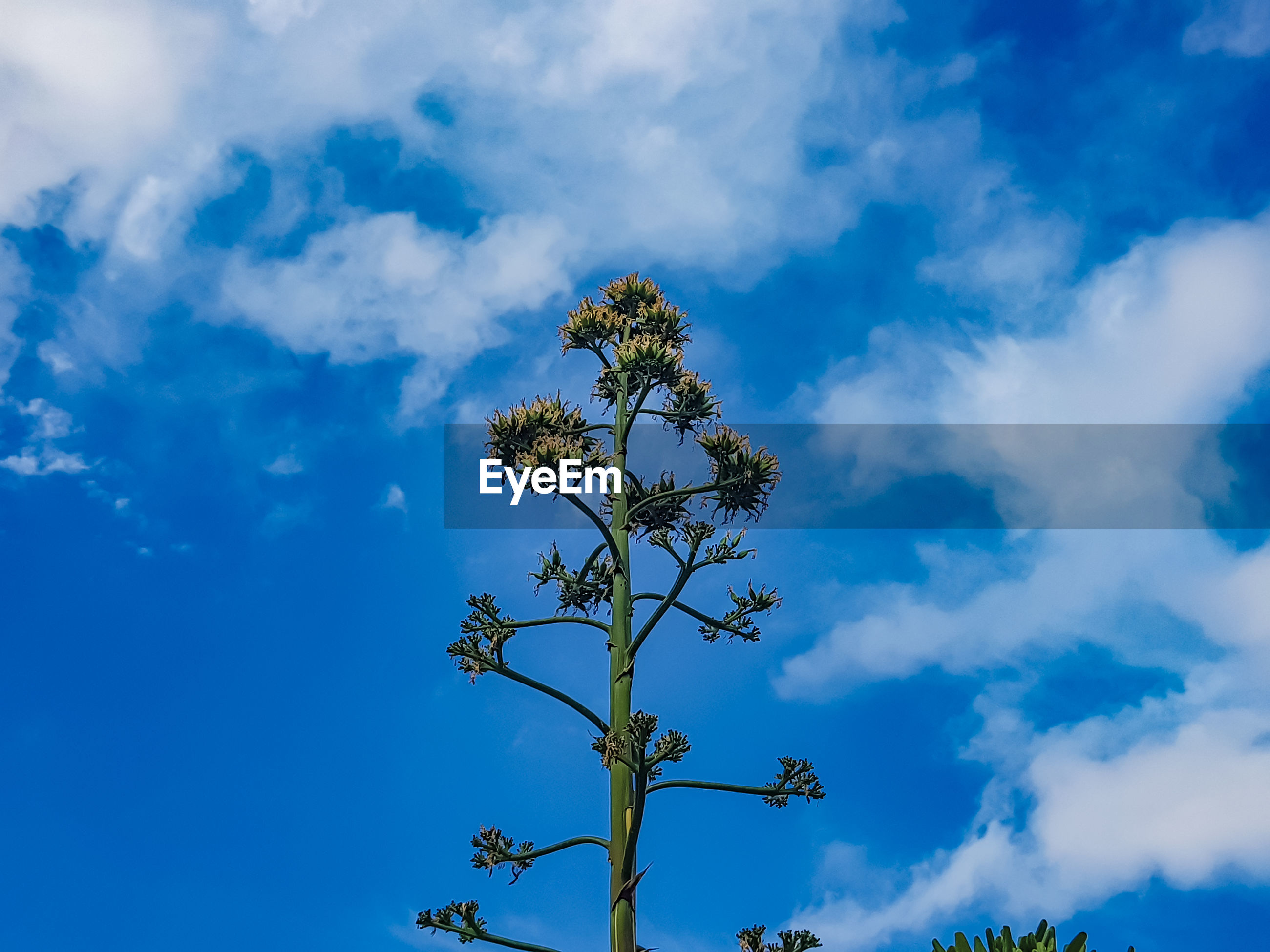 LOW ANGLE VIEW OF PLANT AGAINST BLUE SKY