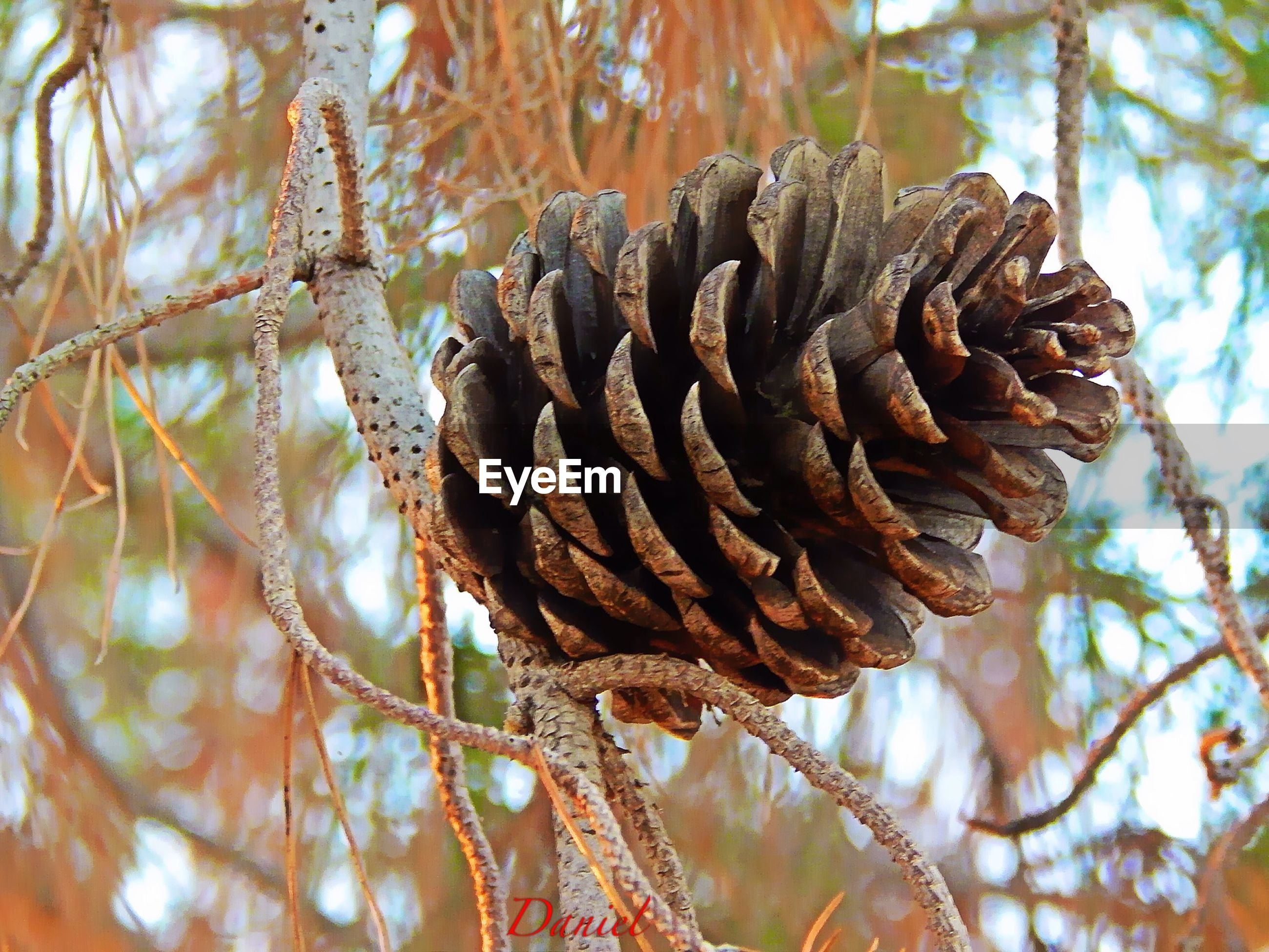 focus on foreground, close-up, nature, tree, brown, branch, natural pattern, growth, tranquility, dry, tree trunk, dead plant, day, pine cone, outdoors, textured, beauty in nature, no people, fungus, plant