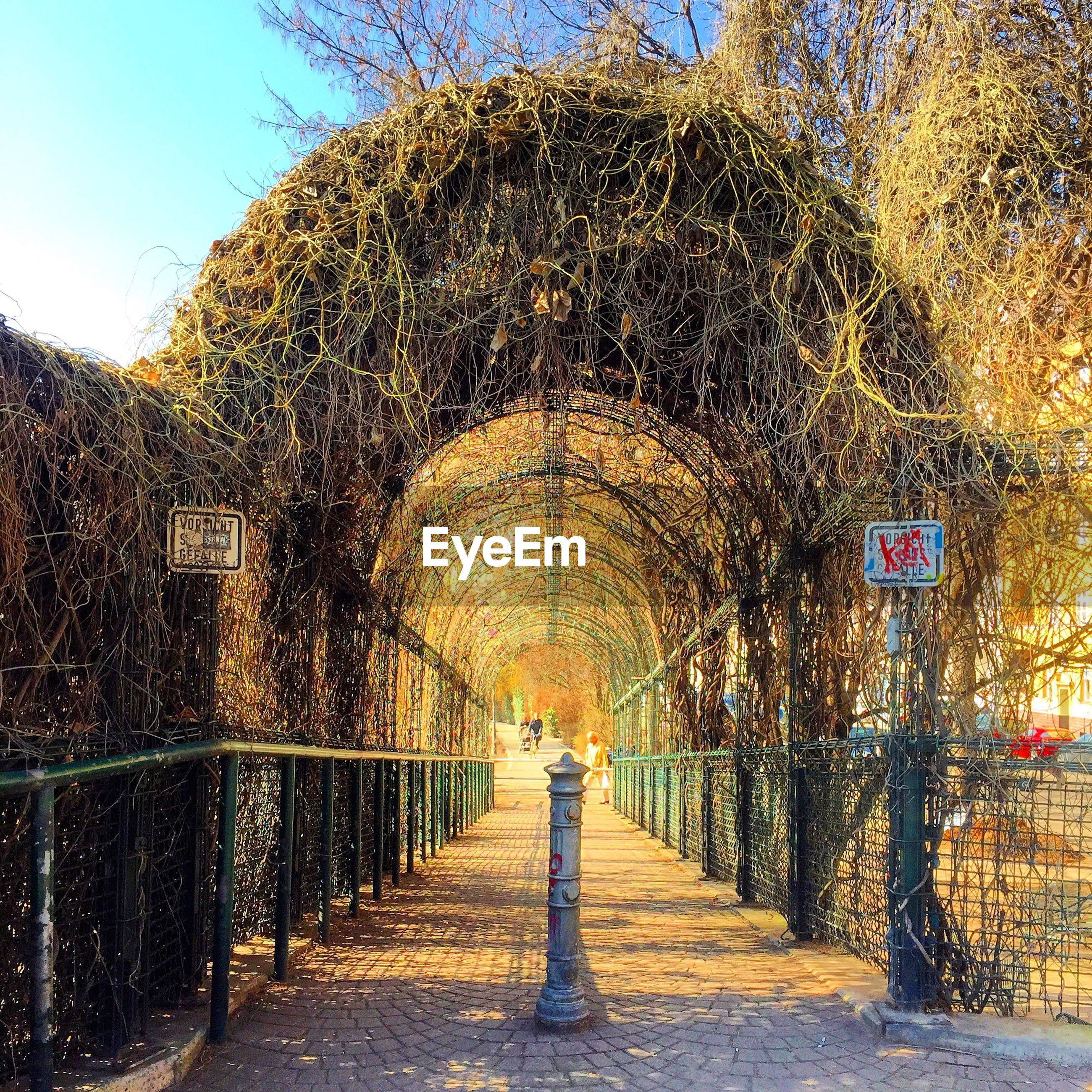 Arched ceiling covered with ivy in park