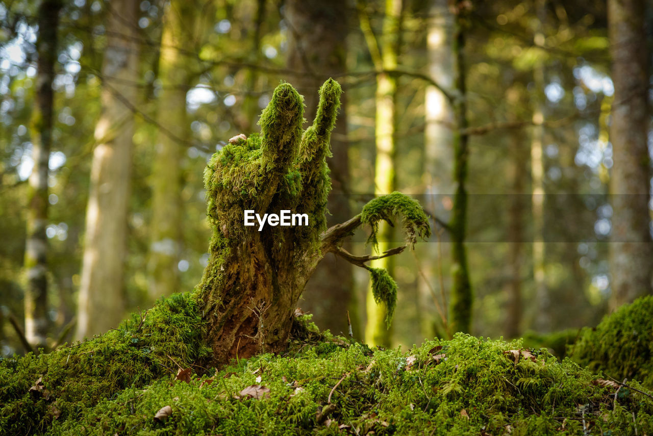 plant, tree, forest, land, growth, moss, tree trunk, trunk, green color, nature, woodland, focus on foreground, beauty in nature, day, tranquility, no people, outdoors, sunlight, close-up, tranquil scene, rainforest, bark