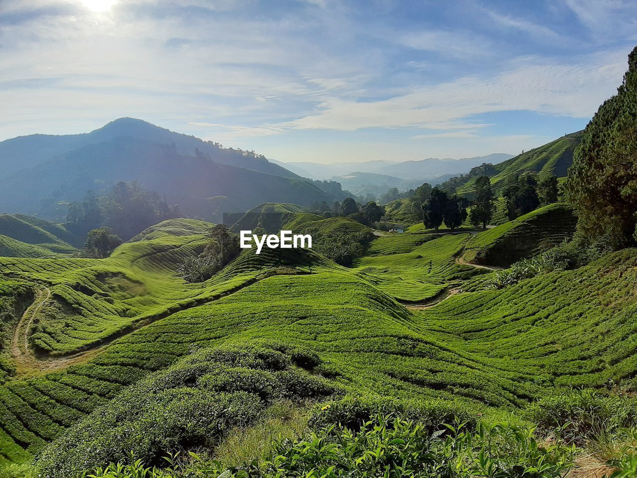 mountain, scenics - nature, beauty in nature, tranquil scene, sky, tranquility, landscape, environment, cloud - sky, green color, mountain range, plant, non-urban scene, nature, idyllic, no people, land, day, agriculture, rural scene, tea crop, outdoors, rolling landscape, plantation