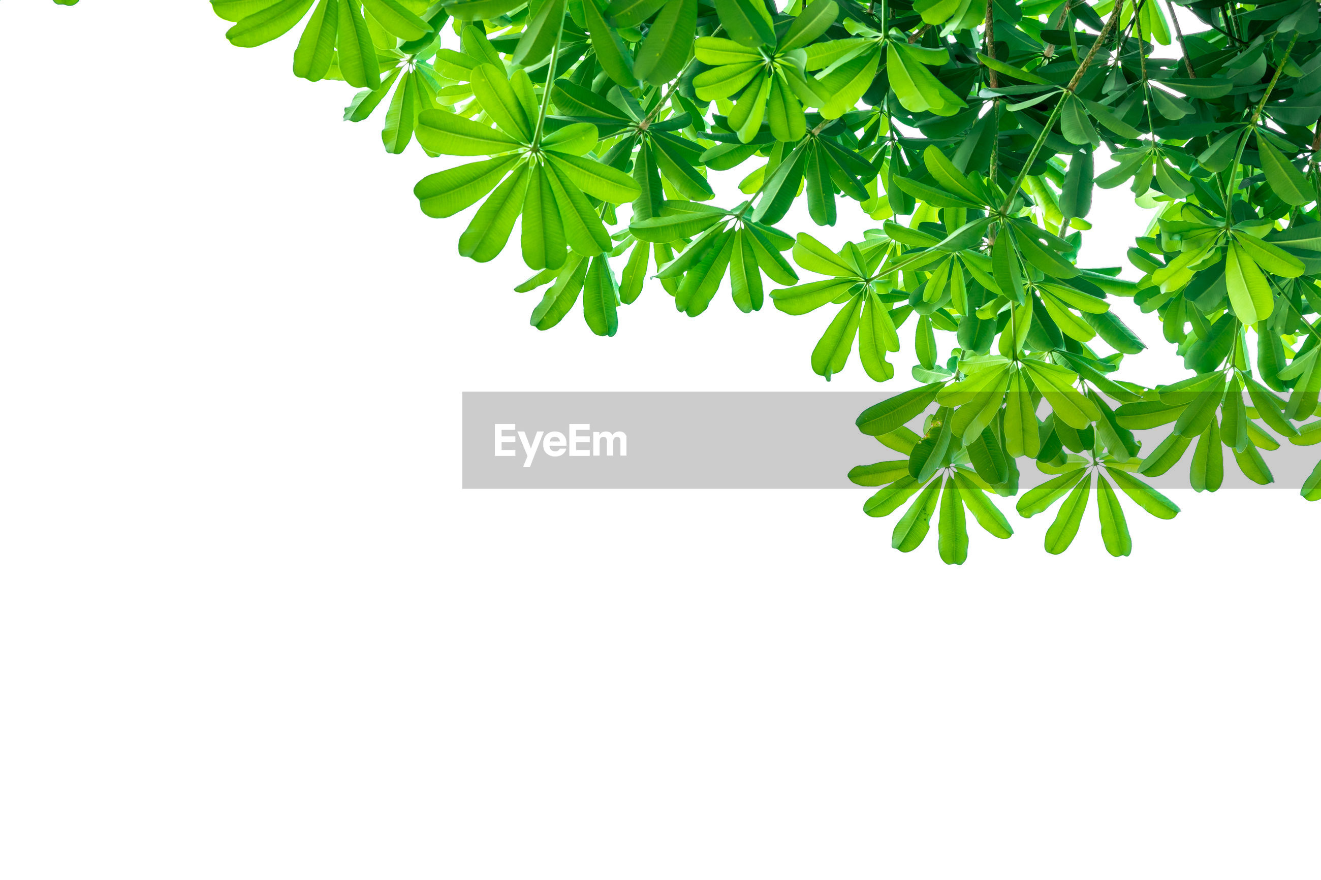LOW ANGLE VIEW OF GREEN PLANT AGAINST WHITE BACKGROUND