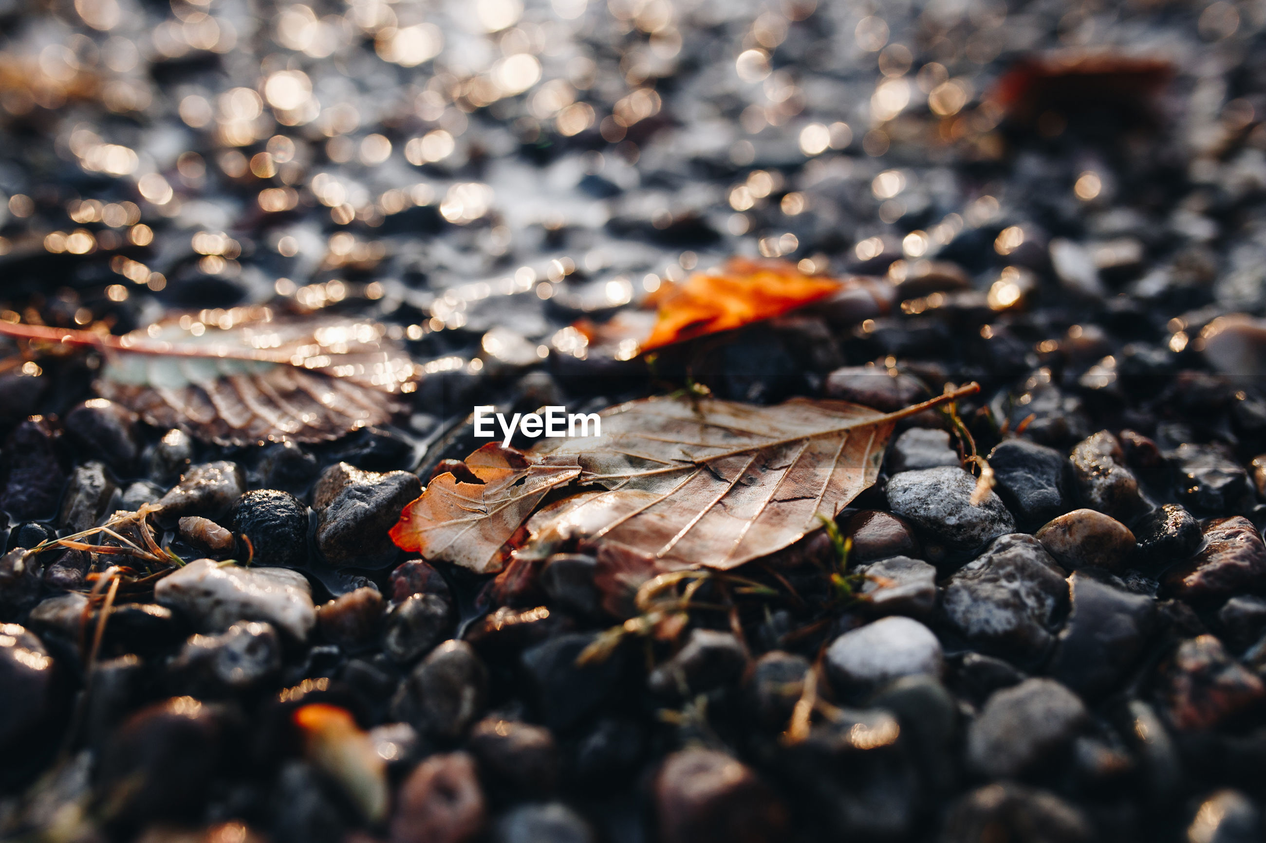 Surface level shot of pebbles at beach during sunset